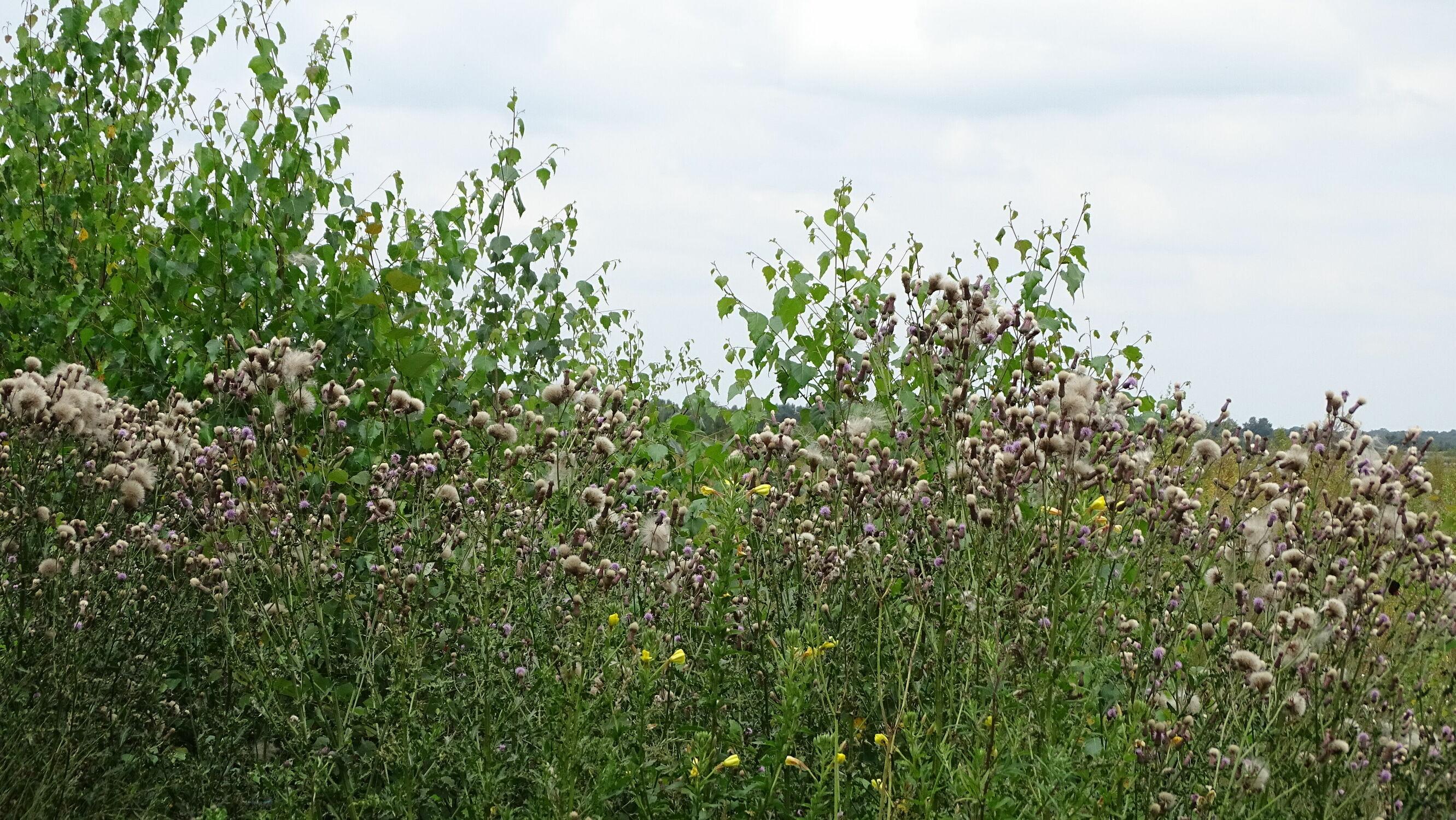 Bild mit Bäume, Amphibien, Laubbäume, Sträucher, Landschaft und Natur, Tiere & Insekten, Moor, Hochmoor
