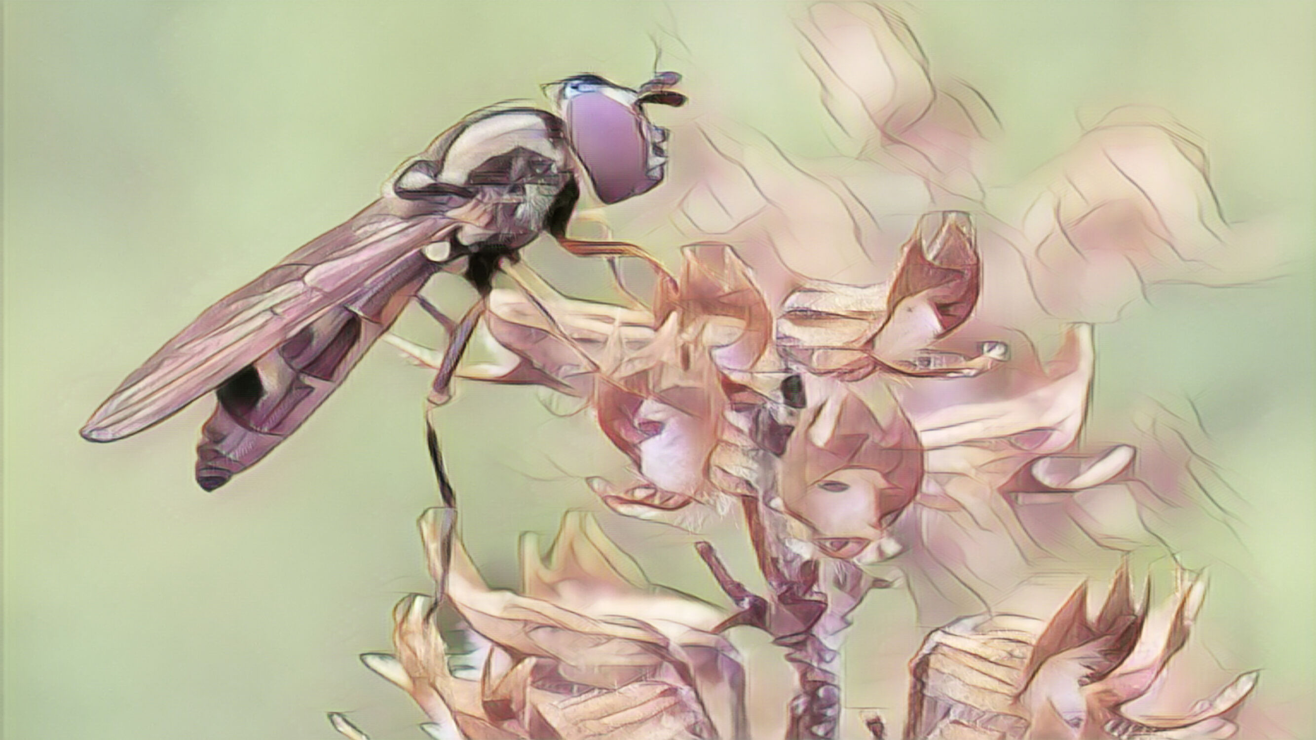 Bild mit Kunst, Natur, Pflanzen, Tier, Blume, Makro, Blüten, garten, Insekt, schwebefliege