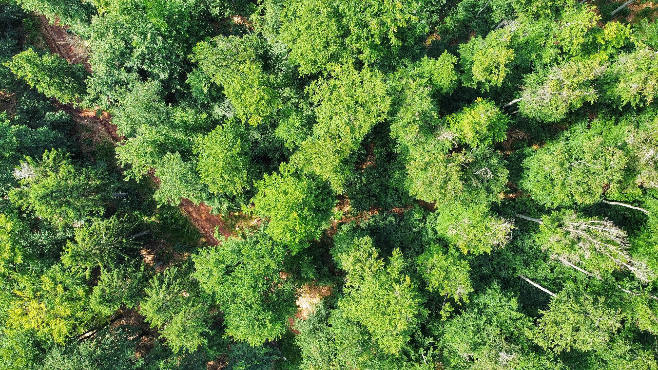Bild mit Natur, Landschaften, Wälder, Wald, Landschaft, Natur pur, Luftaufnahme