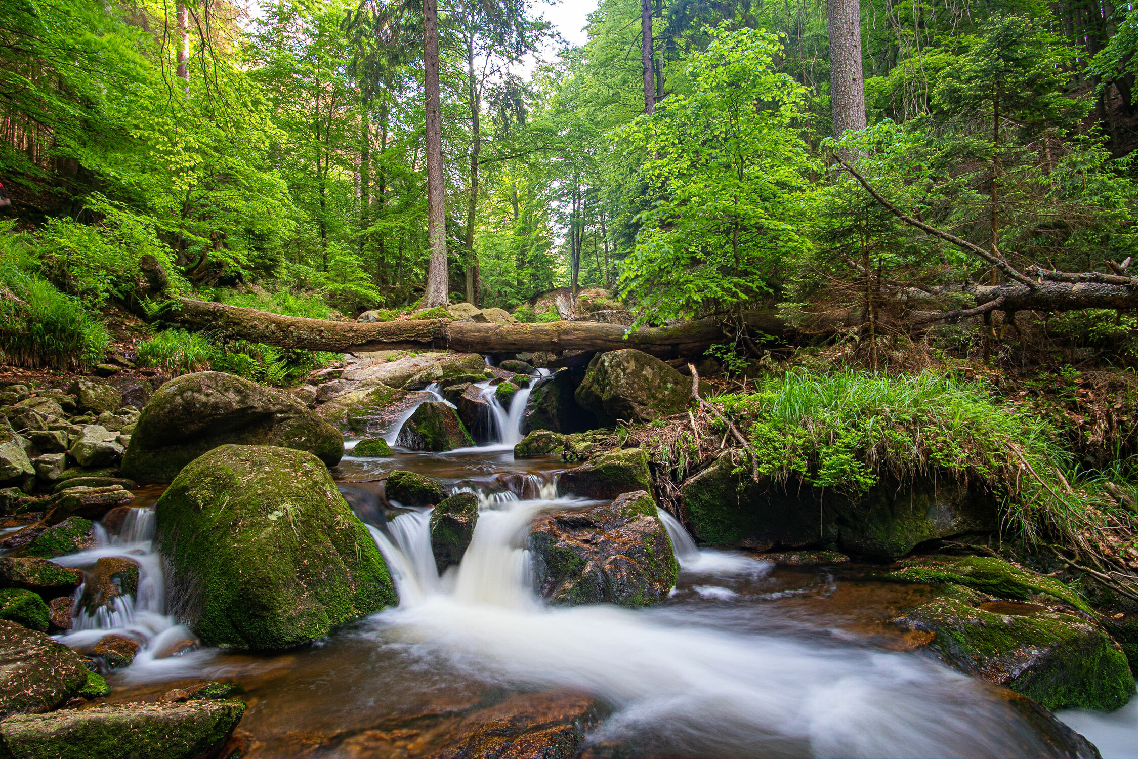 Bild mit Natur, Berge und Hügel, Bäume, Wald, Landschaft, Steine, Bach, Wasserfall, Harz, Ilsefälle