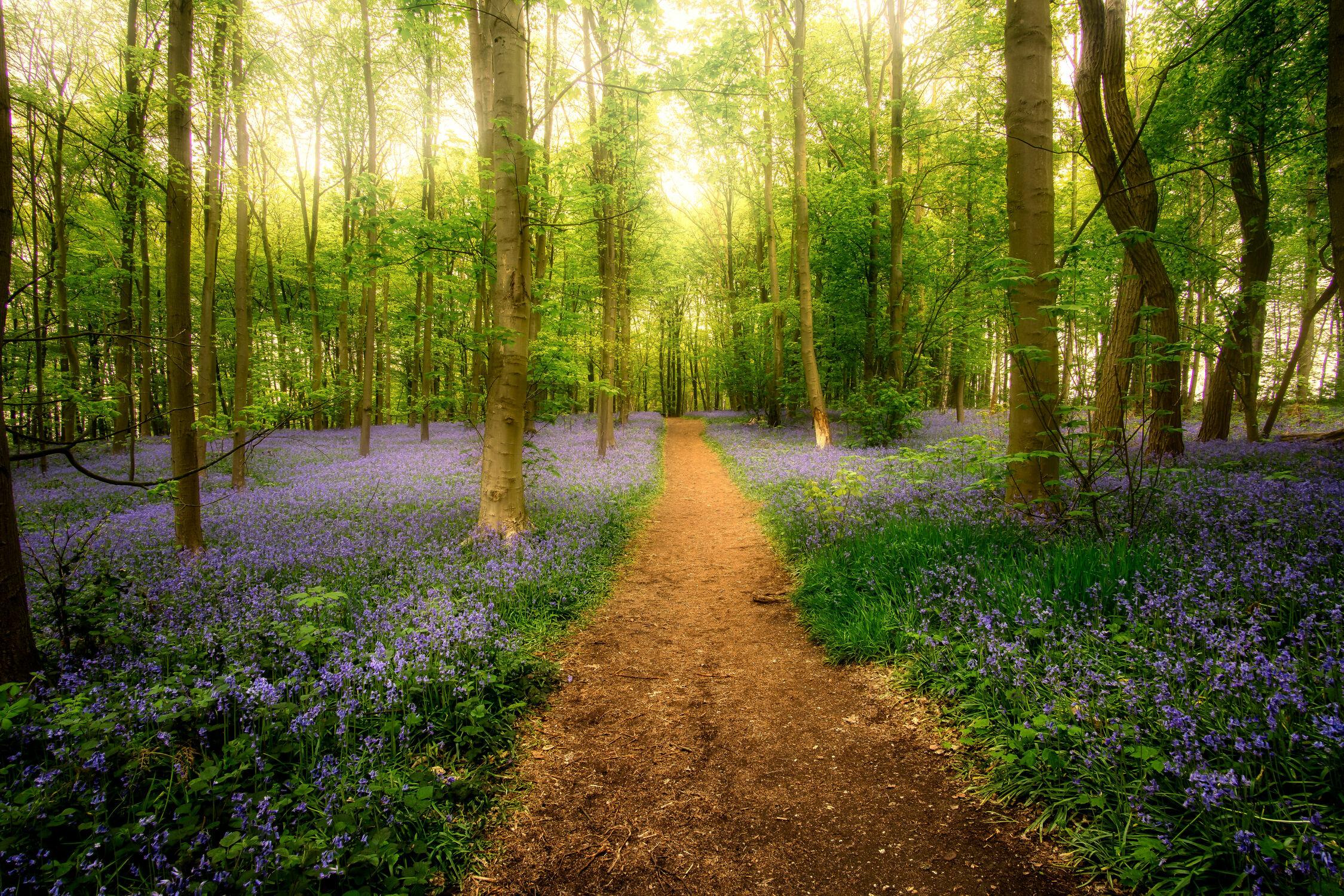 Bild mit Natur, Bäume, Blumen, Wald, Landschaft, Märchenwald, Wiese, Licht, stimmungsvoll, Haselglöckchen