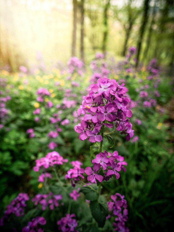 Bild mit Natur, Wald, Blume, Pflanze, Makro, Wiese, Sonnenlicht, Sachsen