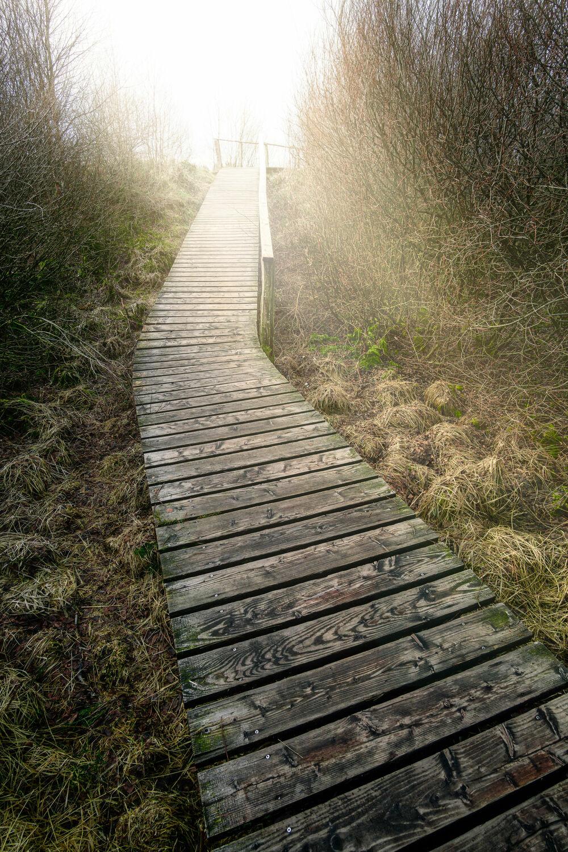 Bild mit Landschaft, Steg, Licht, Holzweg, Moor, Eifel, Belgien