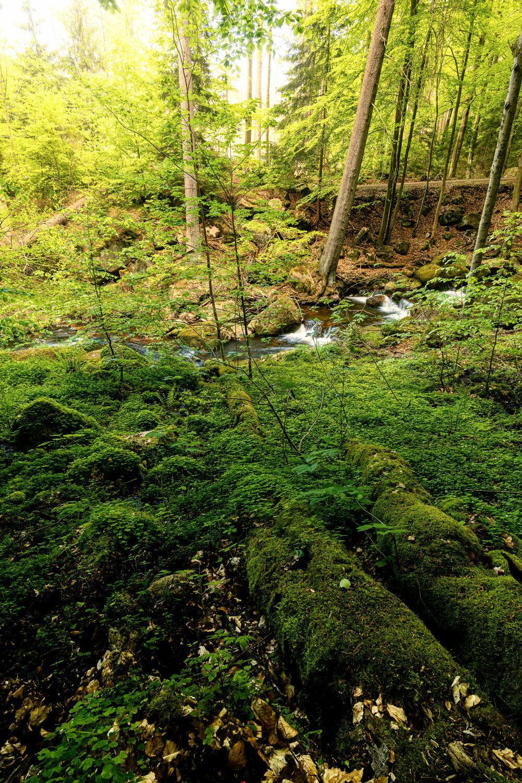 Bild mit Bäume, Sommer, Wald, Landschaft, Harz, Fluss, Moos, Klee