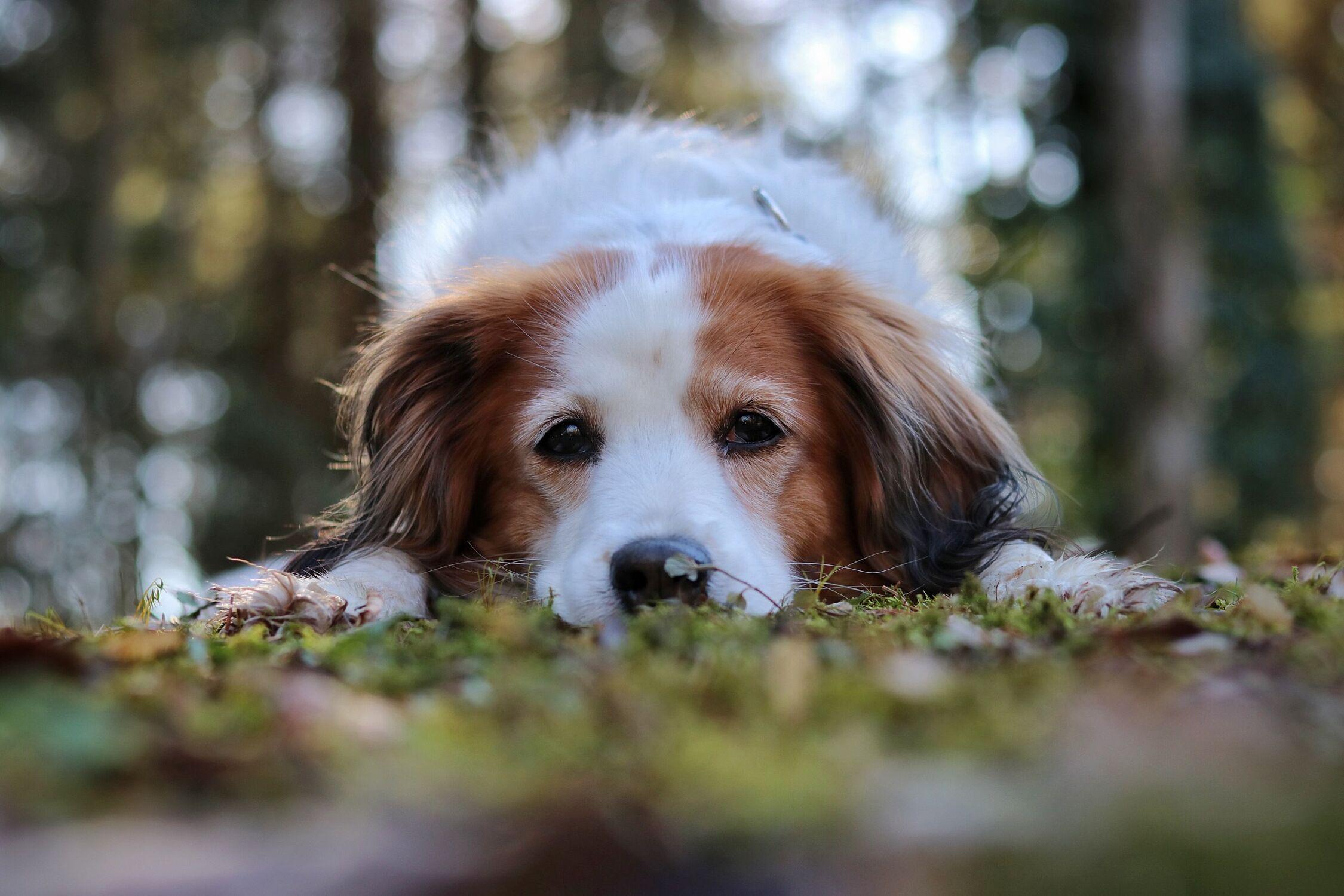 Bild mit Sonne, Wald, Hund, Spaziergang, Fotografien Tiere, gemütlich