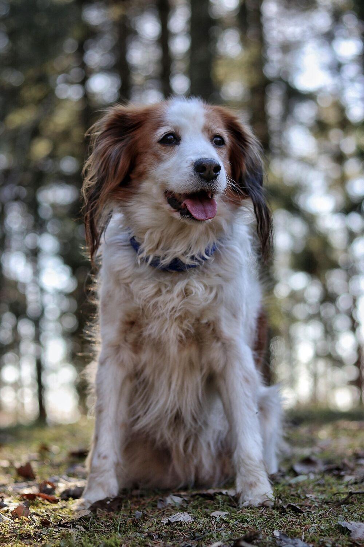 Bild mit Sommer, Sonne, Wald, Waldlichtung, Hund, Spaziergang, Entspannung, Fotografien Tiere