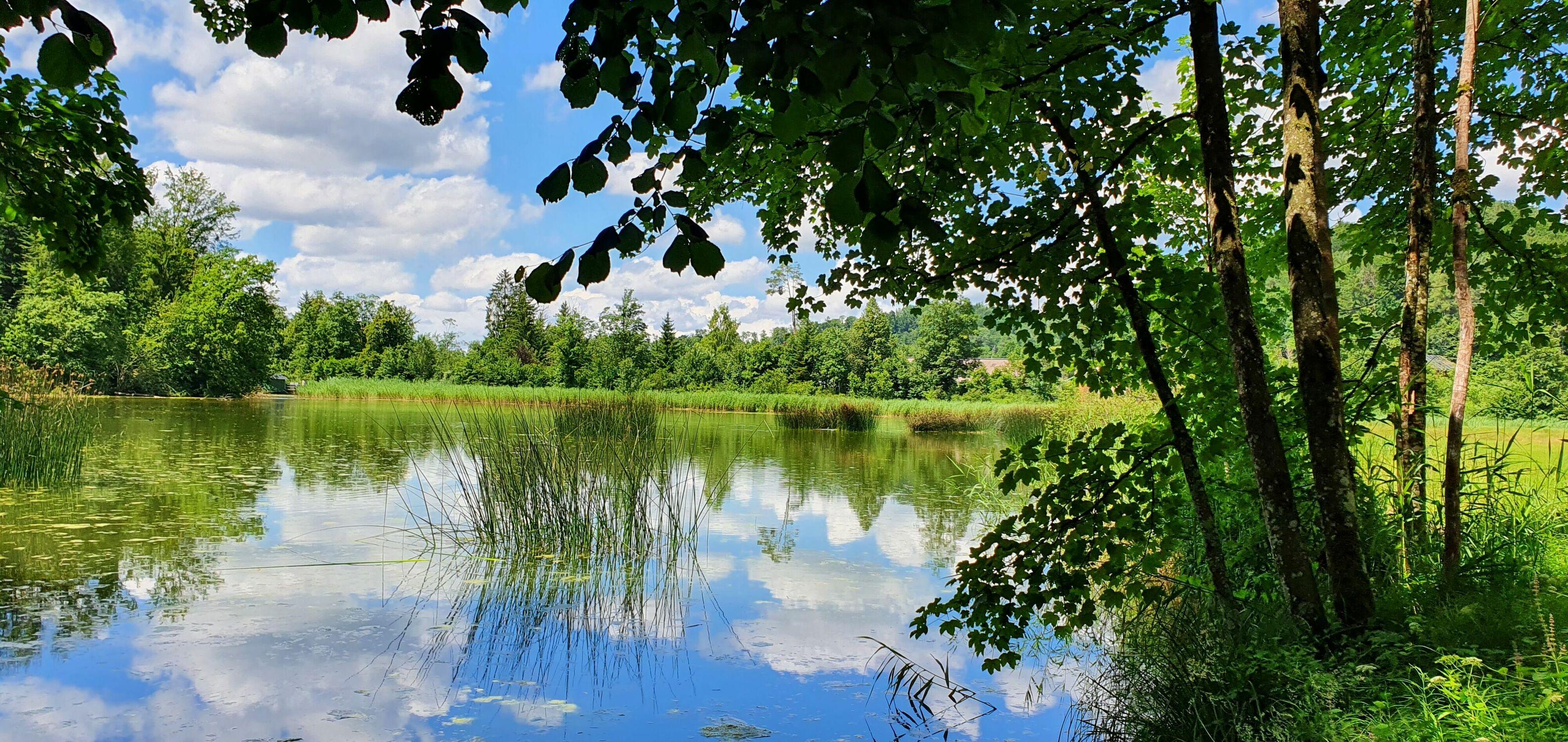 Bild mit Wasser, Pflanzen, Gewässer, Sümpfe, Seeblick, See, Naturwunder