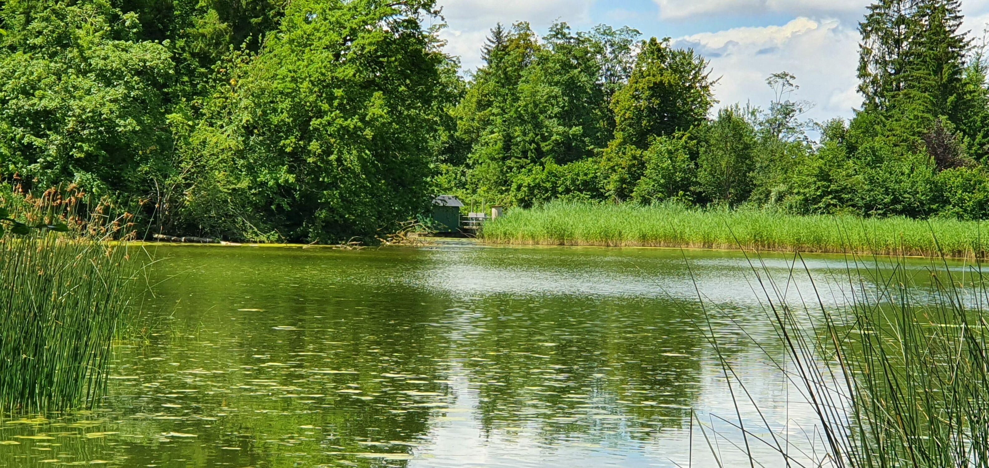 Bild mit Natur, Wasser, Grün, Gewässer, Seeblick, See, Sumpfmoor