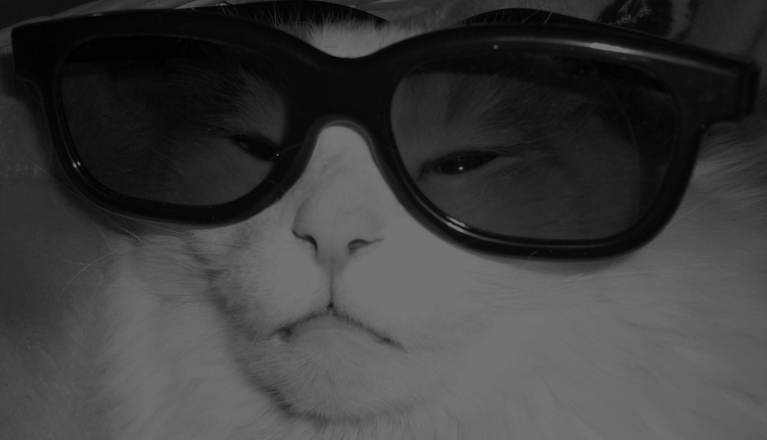 Bild mit Katze