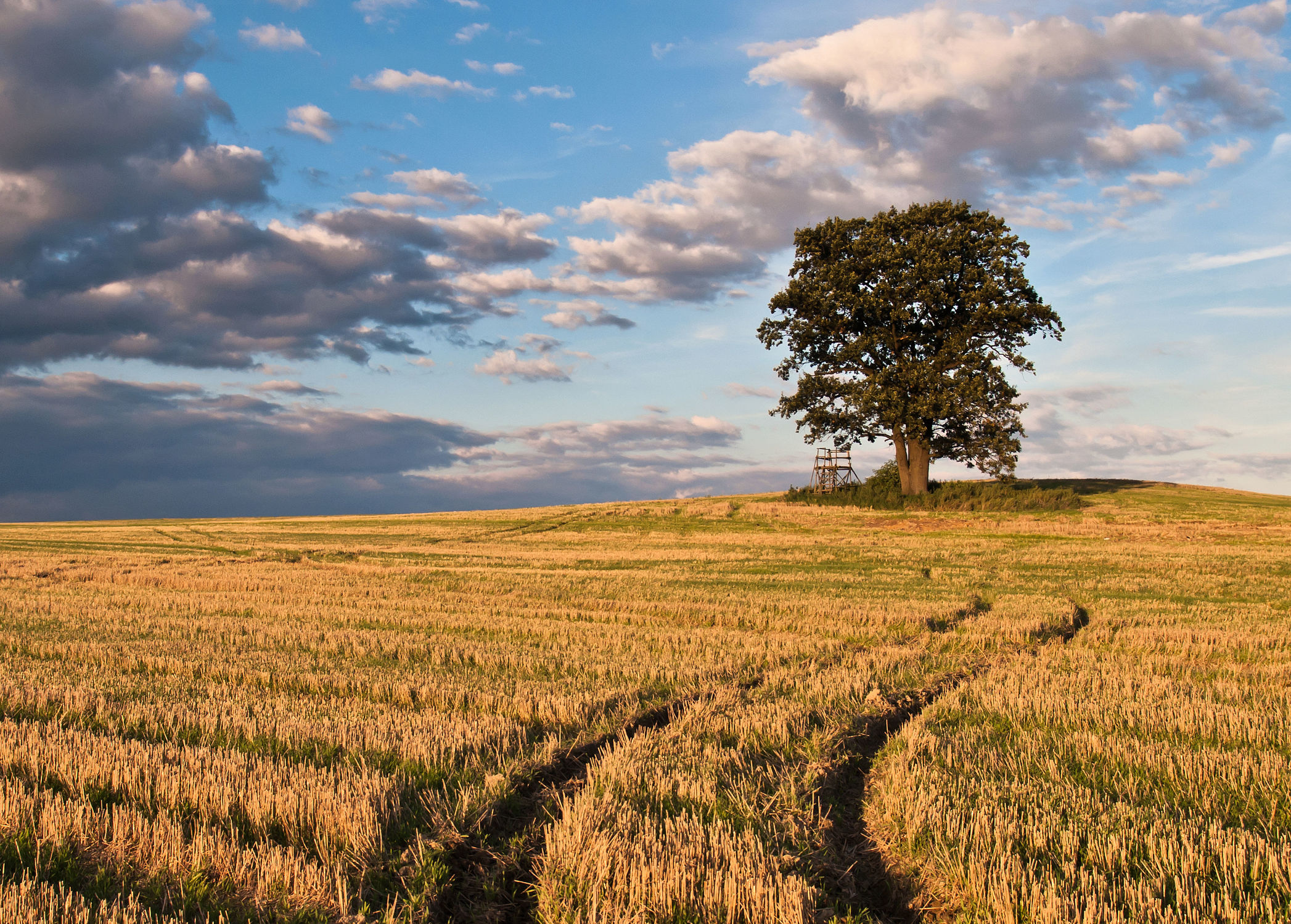 Bild mit Landschaften, Baum, Landschaft, Wiese, Feld, Felder, Wiesen, Weide, Weiden, landwirtschaft, Land, Kornfeld