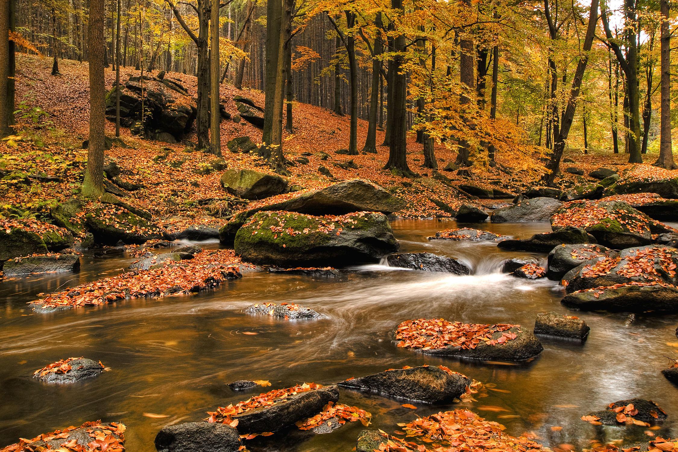 Bild mit Gewässer, Flüsse, Herbst, Wasserfälle, Bach, Wasserfall, Elfen, Wasserläufe, Fluss, Feenland, Elfenland, feen