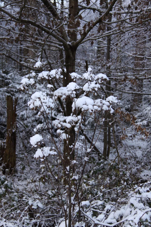 Bild mit winterlandschaft