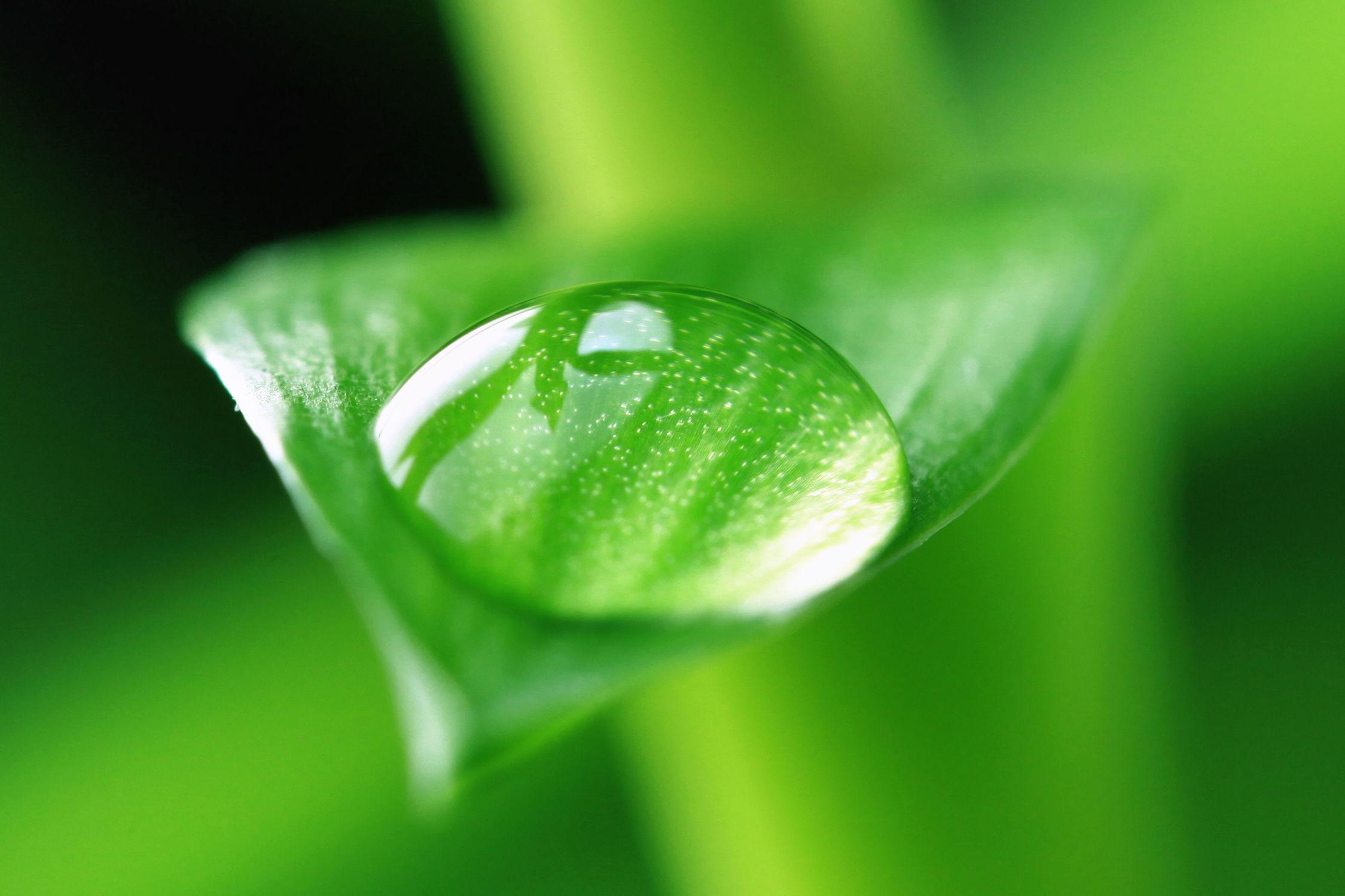 Bild mit Natur, Bambus, Blätter, Blatt, Wassertropfen, Regentropfen, Tropfen, Bambusblatt, Bambusblätter