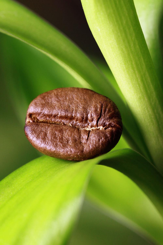 Bild mit Getränke, Bambus, KITCHEN, KITCHEN, aroma, cafe, coffeetime, geröstet, Getränk, Heißgetränk, kaffee, kaffeebohne, kaffeebohnen, kaffeeduft, kaffeetasse, kaffeetassen, kaffezeit, tassen, ungemahlen, kaffe, Cappuccino, Mokka, Espresso, Küche, Küchen