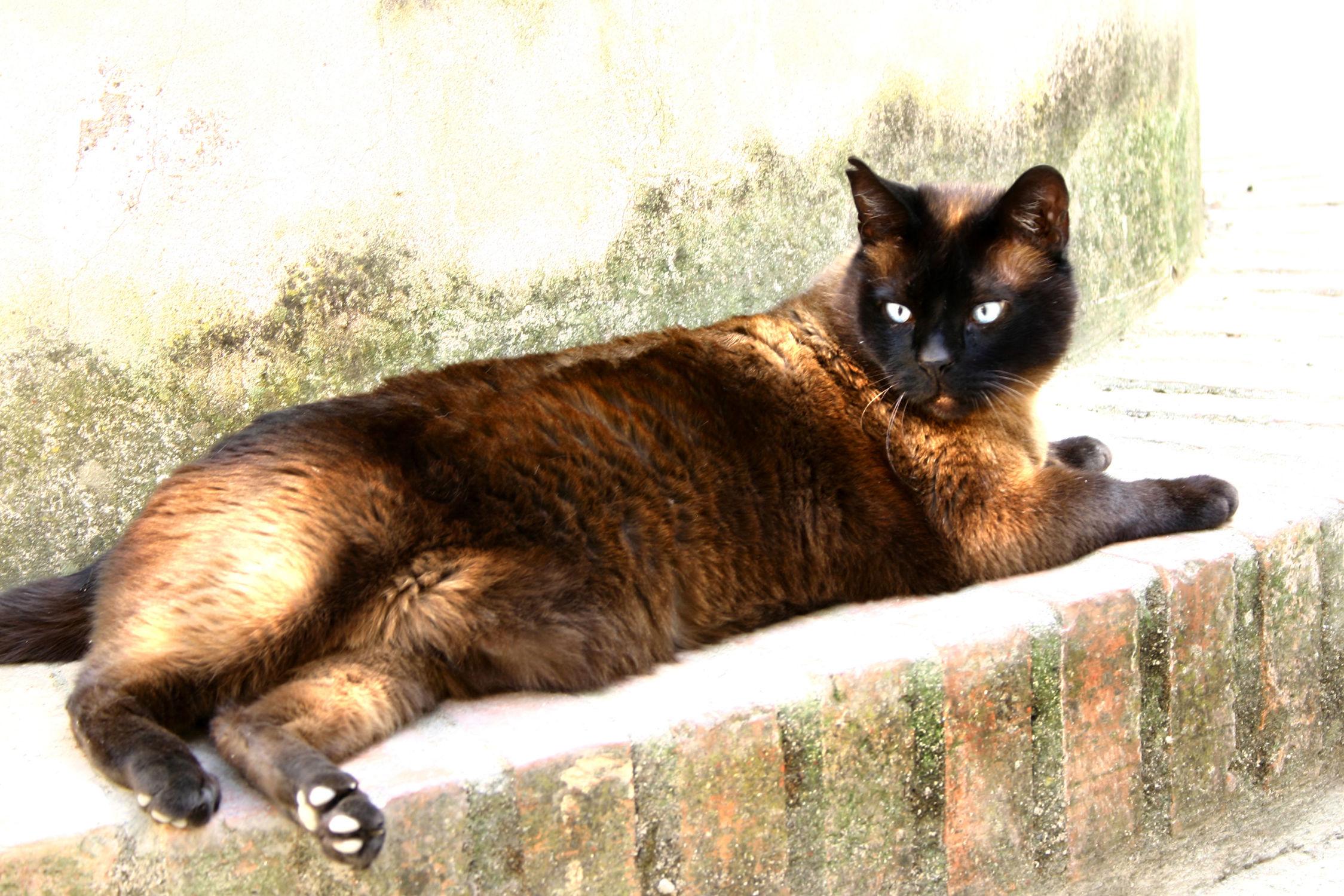 Bild mit Tiere, Haustiere, Katzen, Katze, Katzenbilder