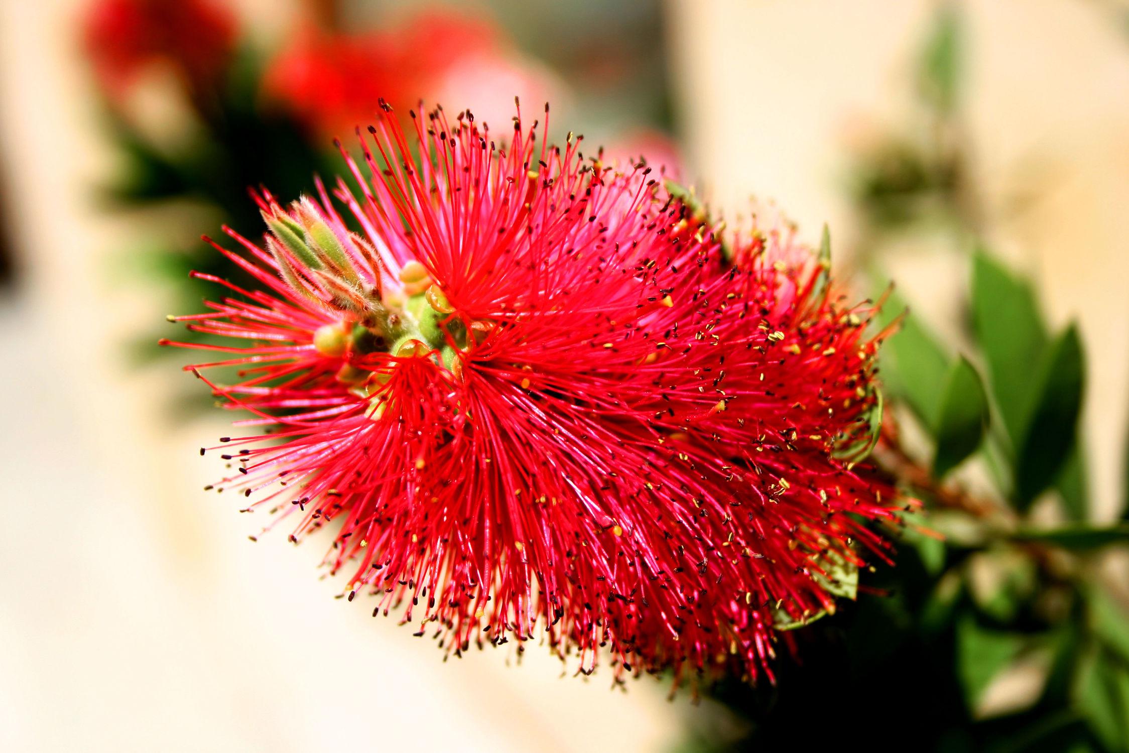 Bild mit Blumen, Blume, Pflanze, Topfpflanze, Flaschenputzer