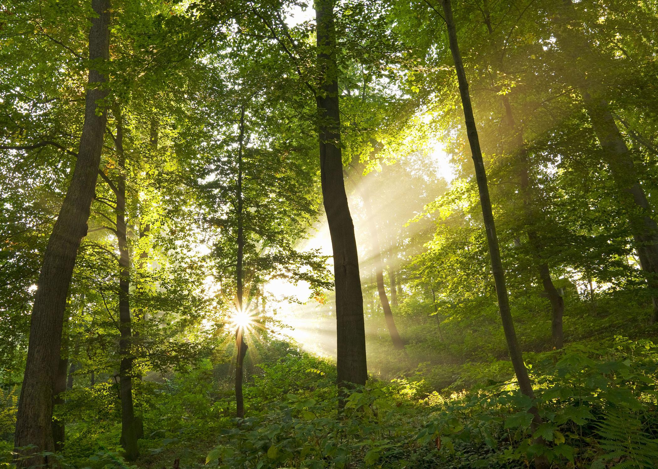 Bild mit Natur, Landschaften, Bäume, Wälder, Sonne, Wald, Baum, Waldlichtung, Landschaft, Märchenwald