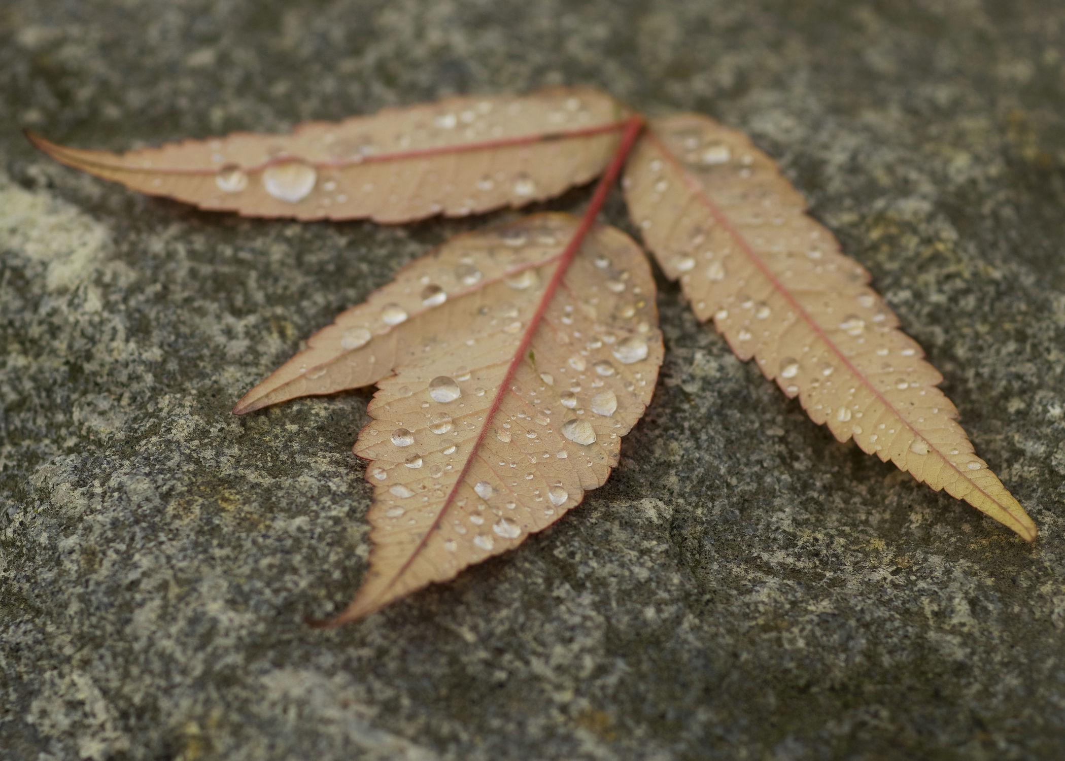 Bild mit Natur, Wasser, Blätter, Blatt, Wassertropfen, Regentropfen, Wasserperlen, Blumen und Blüten, Tropfen, Tropfenzauber, Regen
