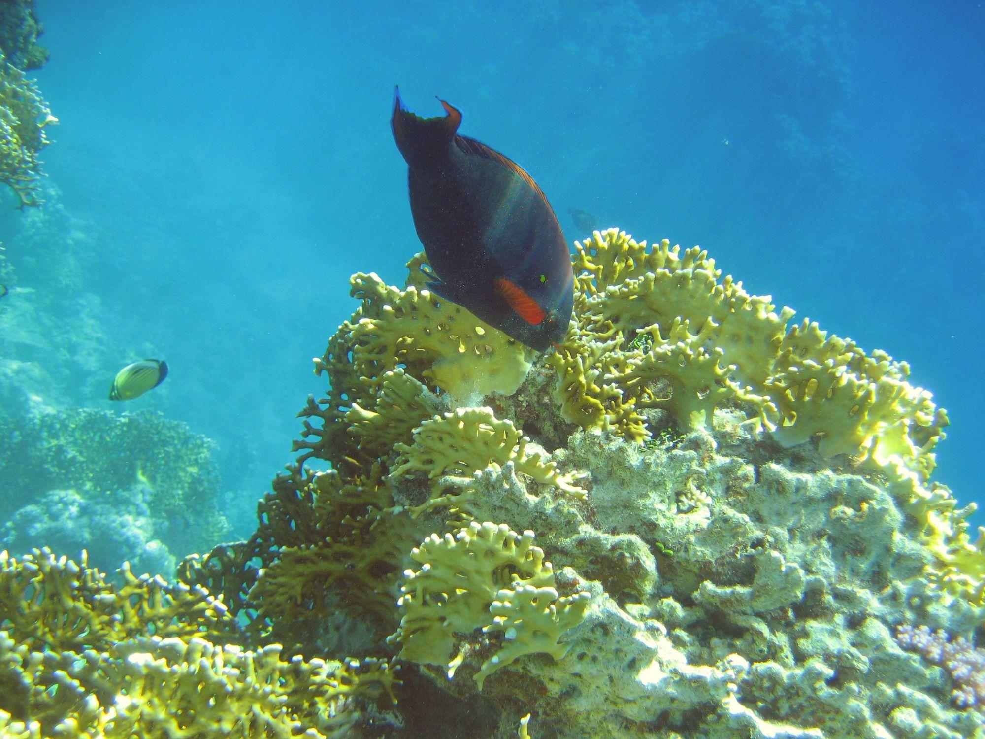 Bild mit Am Korallenriff