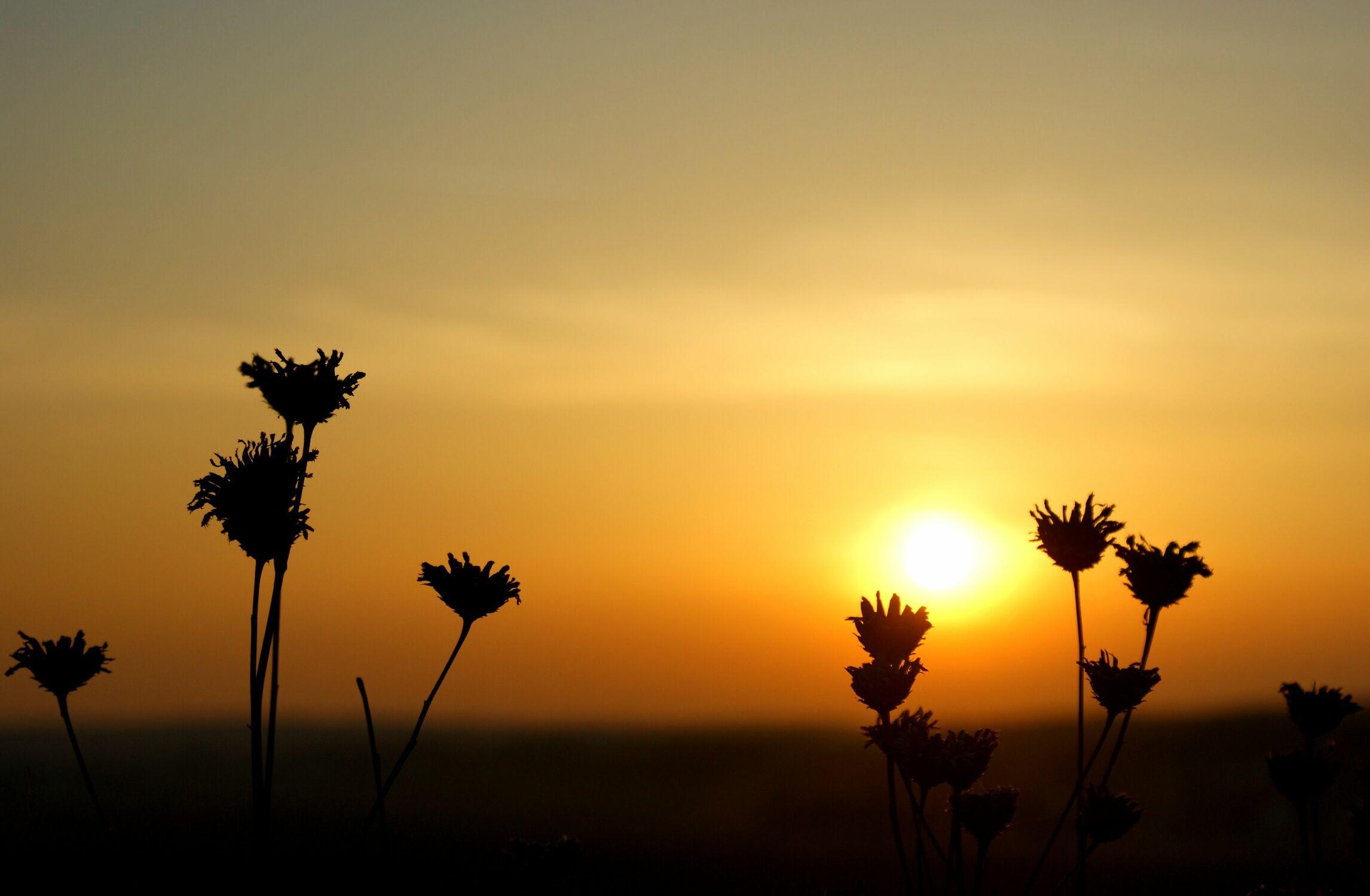 Bild mit Natur, Blumen, Sonnenuntergang, Sonnenaufgang, Blume