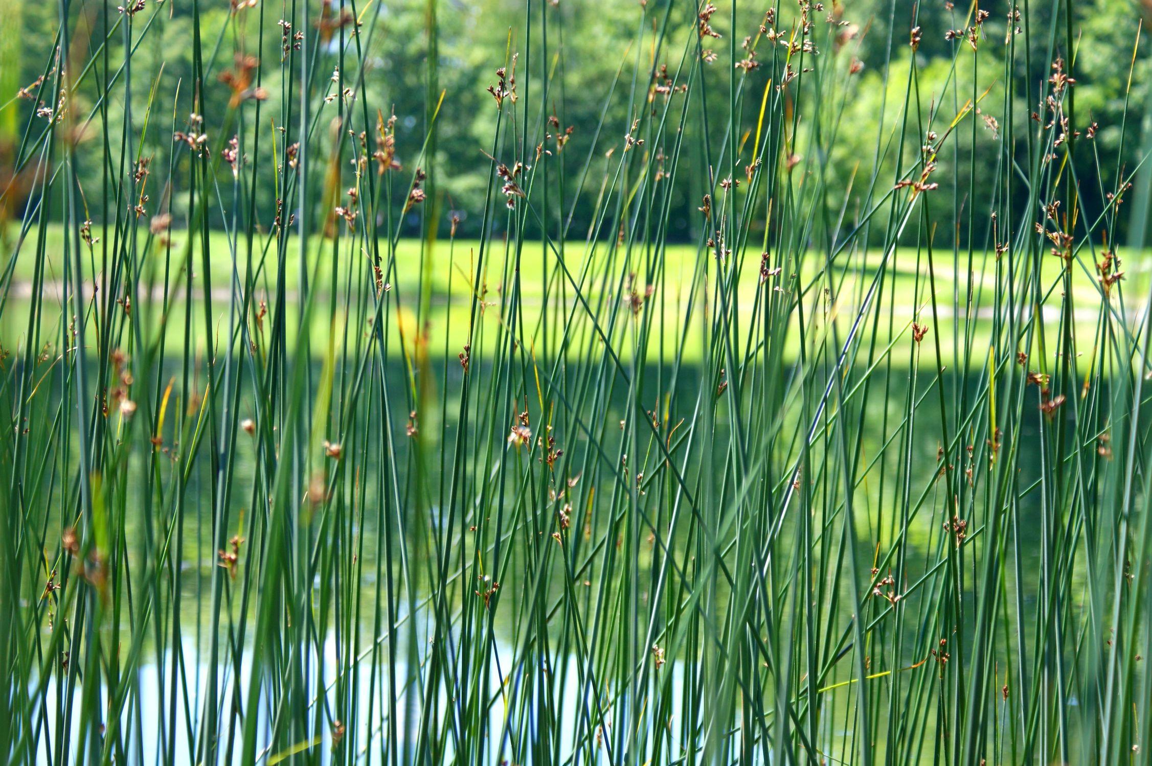 Bild mit Natur, Gräser, Gewässer, Seen, Gras, See, Ruhe am See, auwald