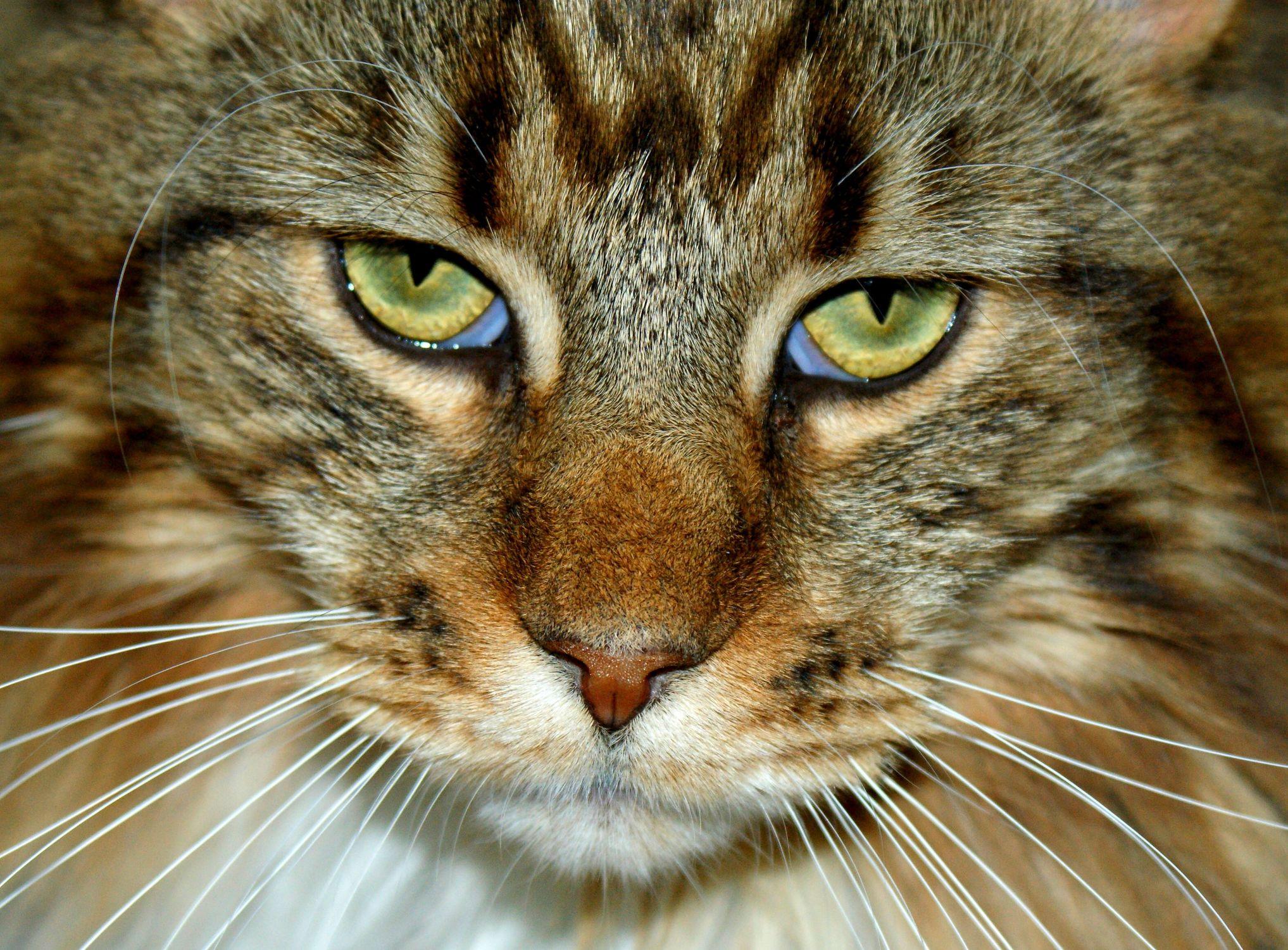 Bild mit Tiere, Katzen, Tier, Katze, Katzenbilder, Tierwelt, Kater