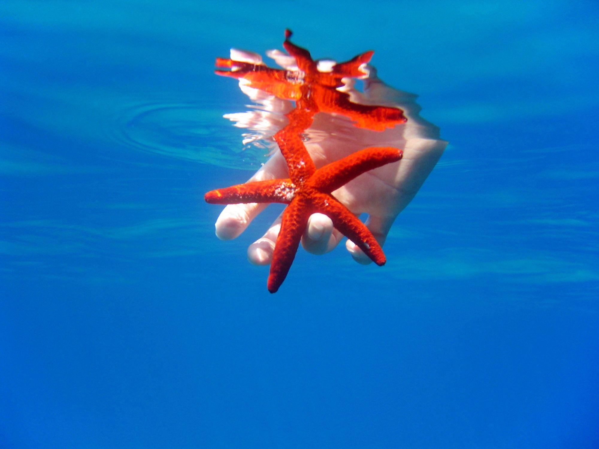 Bild mit Unterwasser