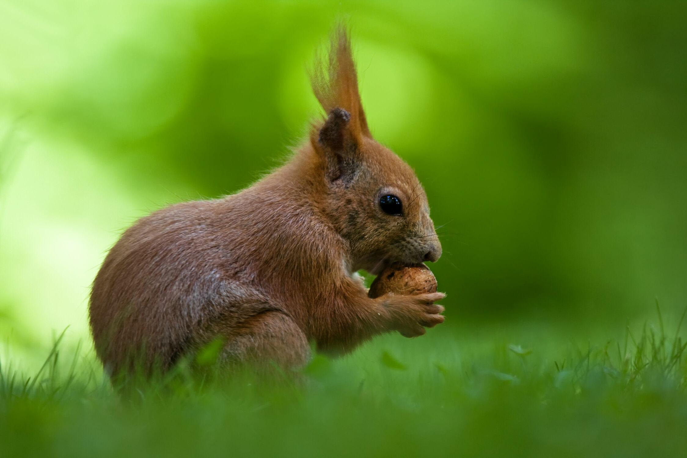 Bild mit Eichhörnchen