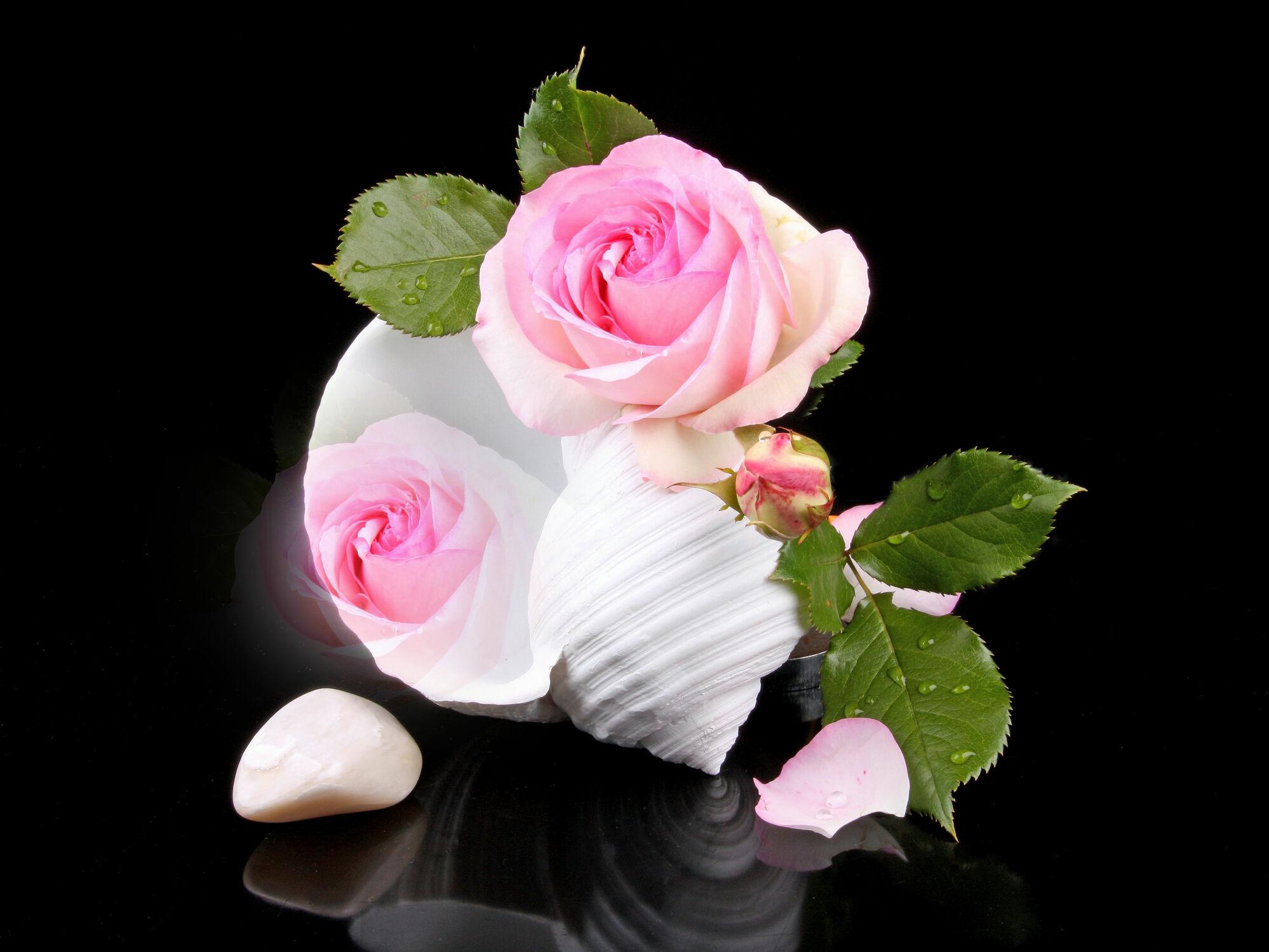 Bild mit Blumen, Rosen, Blätter, Blume, Rose, Blatt, Muschel, Fauna, Floral, Flora, Stilleben, Blüten, Florales, blüte, dekorativ