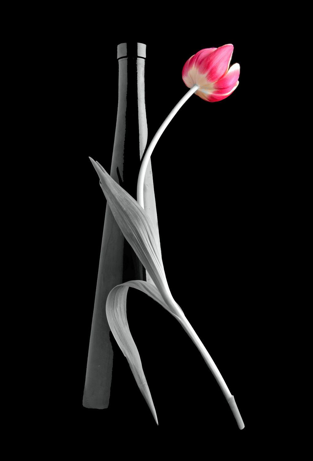 Bild mit Blumen, Blume, Tulpe, Tulpen, Fauna, Floral, Flora, Blüten, Florales, Stilleben & Objekte, blüte, dekorativ