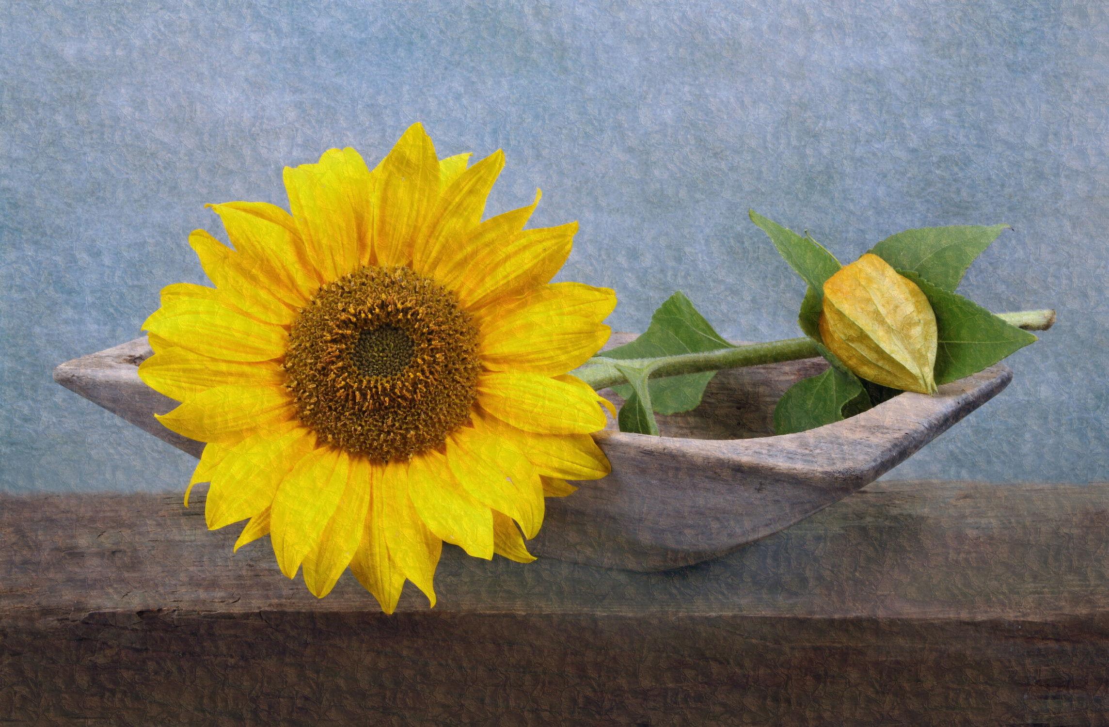 Bild mit Sonnenblumen, Blume, Sonnenblume, Floral
