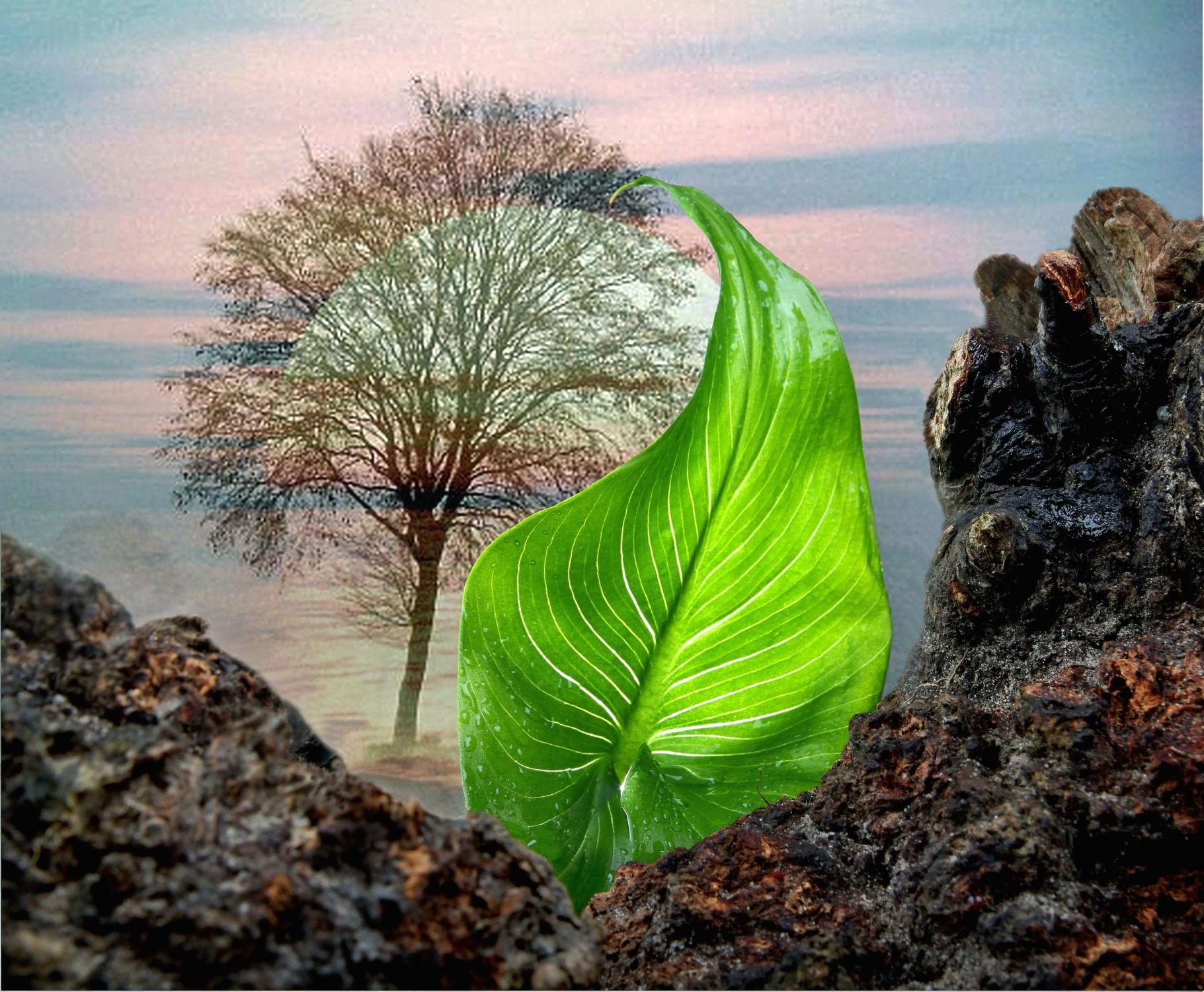 Bild mit Natur, Pflanzen, Himmel, Bäume, Wolken, Sonnenuntergang, Sonne, Baum, Blätter, Landschaft, Pflanze, Blatt, Fauna, Gebirge