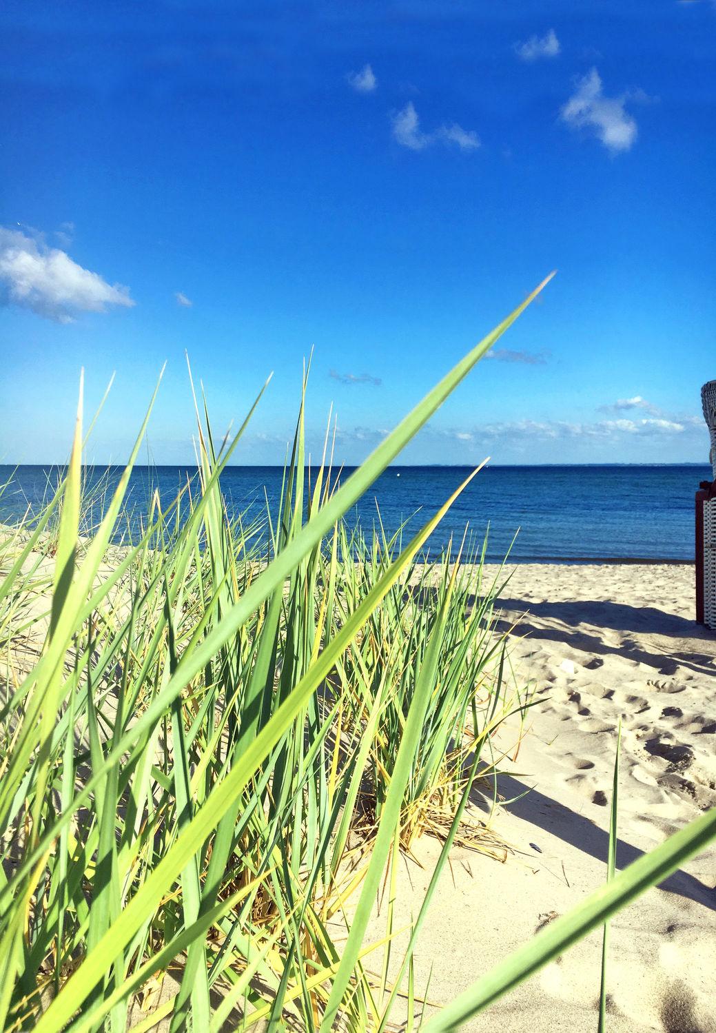 Bild mit Himmel, Horizont, Sand, Urlaub, Strand, Sandstrand, Meerblick, Panorama, Ostsee, Meer, Düne, Dünengras, Holliday, Nordsee, Blauer Himmel, Schilfgras, Dünen Schilf, Strandpflanzen, Strandpflanze, Dünen panorama, Dünenblick, Wasserblick