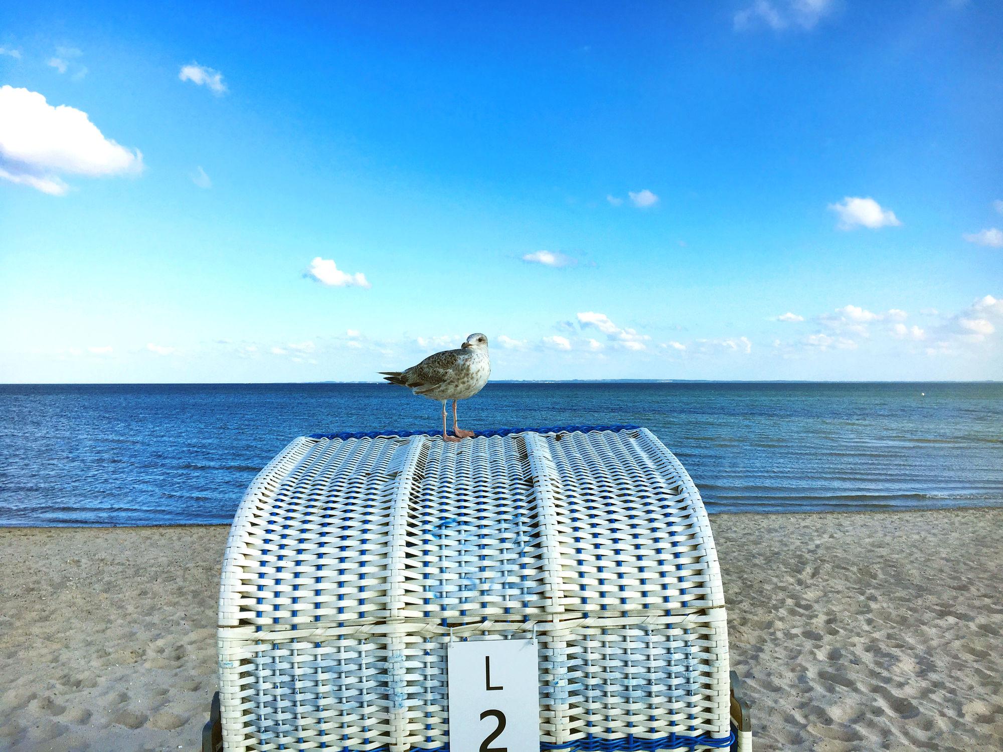 Bild mit Natur, Himmel, Strände, Horizont, Sand, Urlaub, Strand, Strandblick, Meerblick, Strandkörbe, Panorama, Lübecker Bucht, Grömitz, Meer, Strandkorb, Landschaft, Möwe, Möve auf Strandkorb, Schleswig, Holstein, Ostholstein