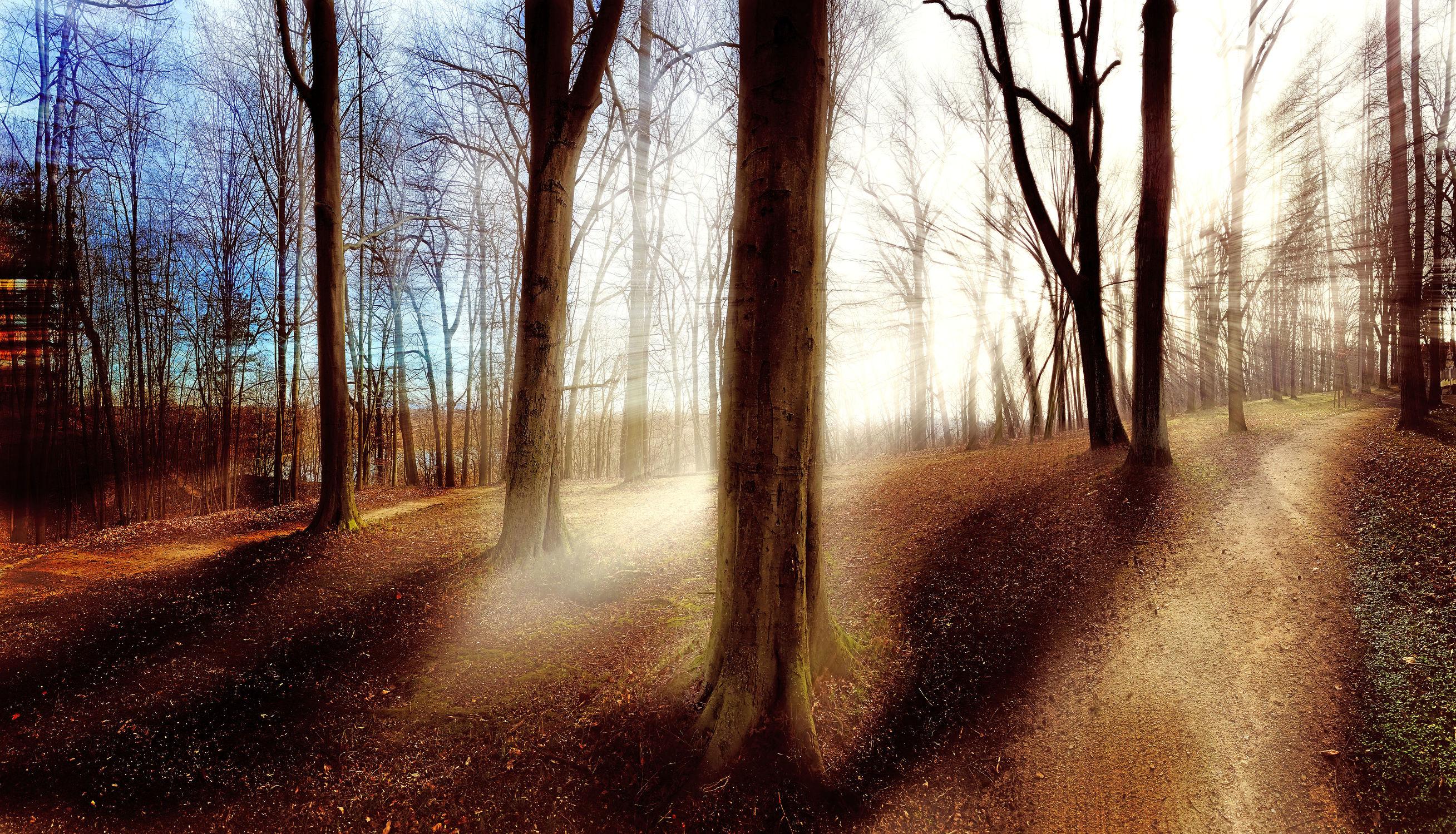 Bild mit Natur, Bäume, Nadelbäume, Wälder, Wald, Lichtung, Baum, Baumstamm, Landschaft, Märchenwald, Waldblick, Blick in den Wald, Forstwirtschaft, Forest, Waldbild, Waldbilder, Wald Bild, Wald Bilder, Nature, Tree, Baumstämme, Mischwald, Baumgewächs, Waldrand, Blick in den Wald mit Gegenlicht, Waldboden, Gegenlicht, Laubwald, mystisch