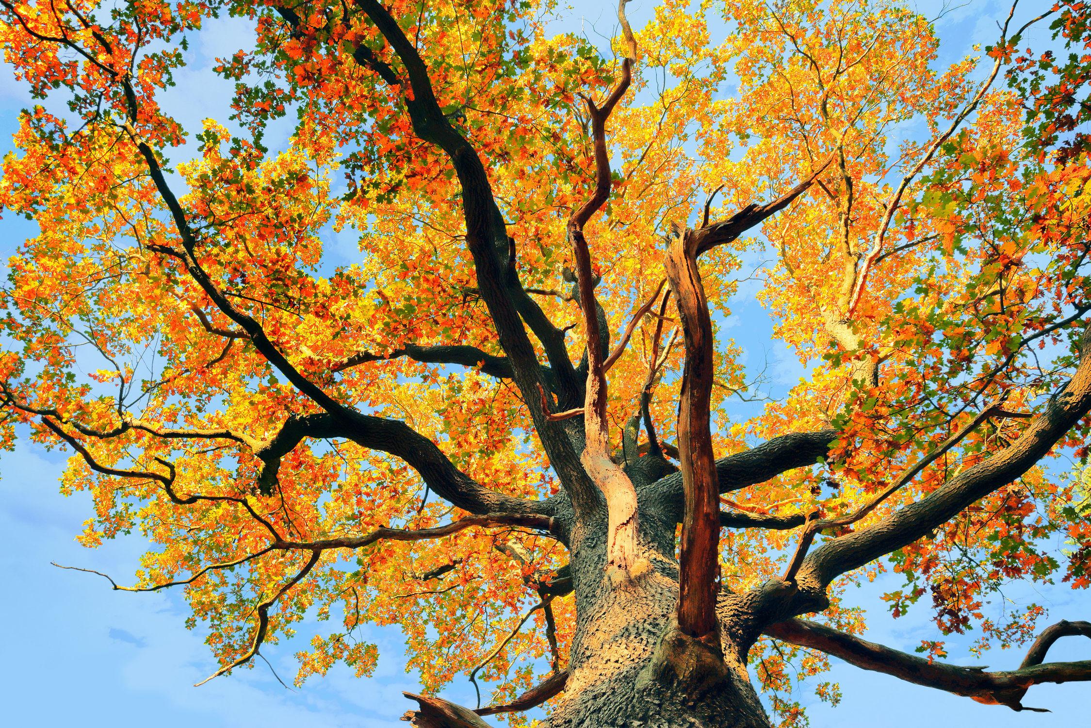 Bild mit Natur, Herbst, Baumkrone, Baum, Landschaft, Laubbaum, Gegenlicht, Jahreszeit, autumn