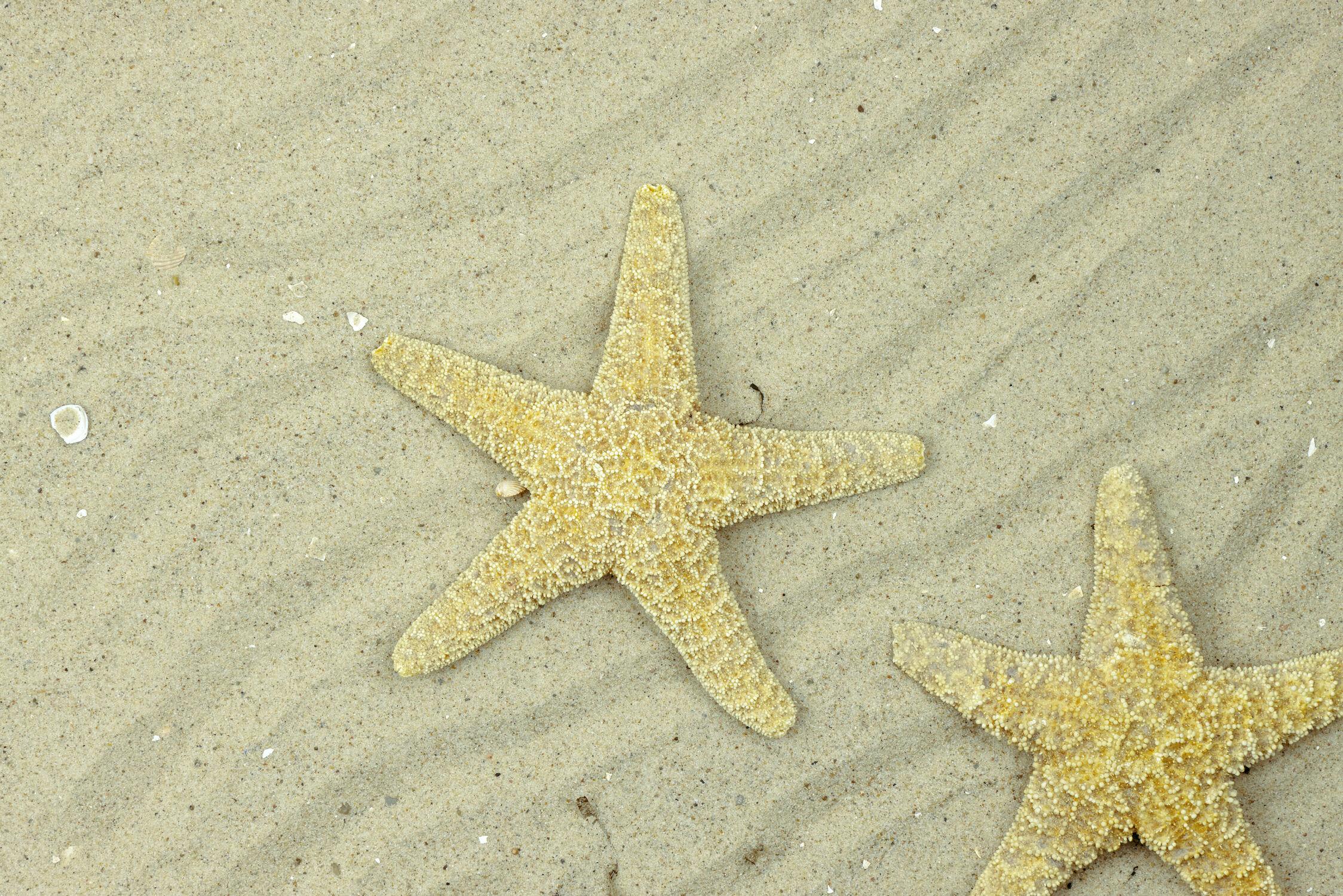 Bild mit Sand, Sandstrand, Strandbild, Seestern, Seesterne, Wellness, Spa