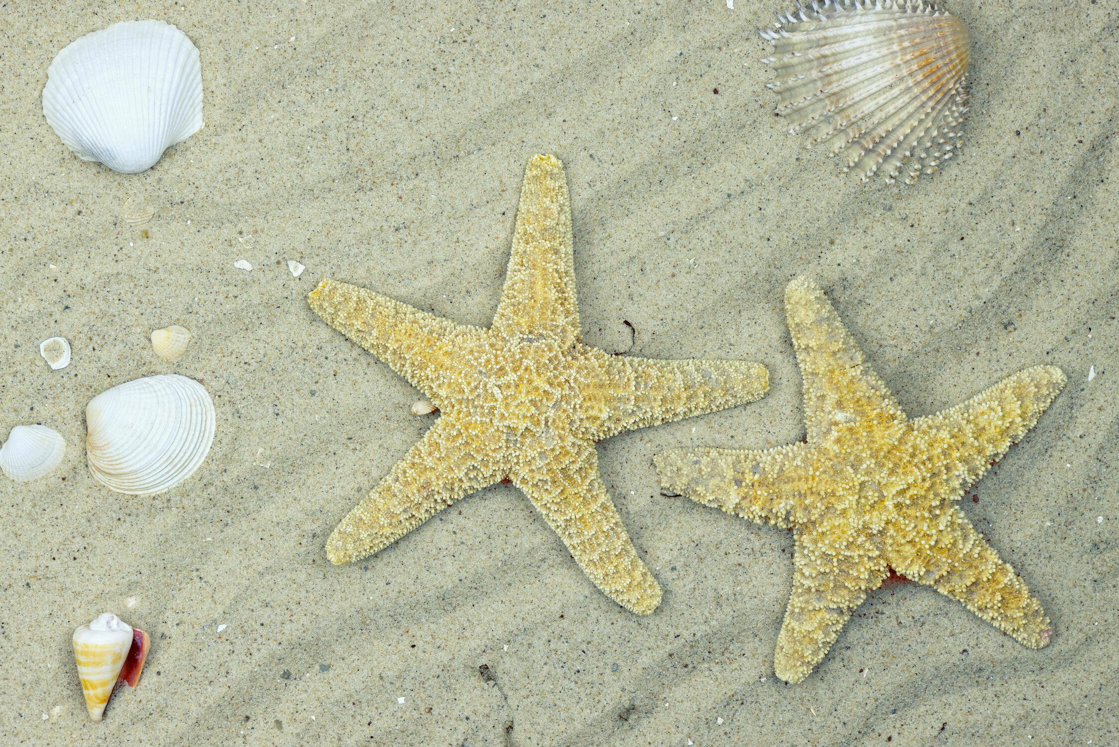 Bild mit Sand, Sandstrand, Strandbild, Muschel, Muscheln, Seestern, Seesterne, Wellness, Spa