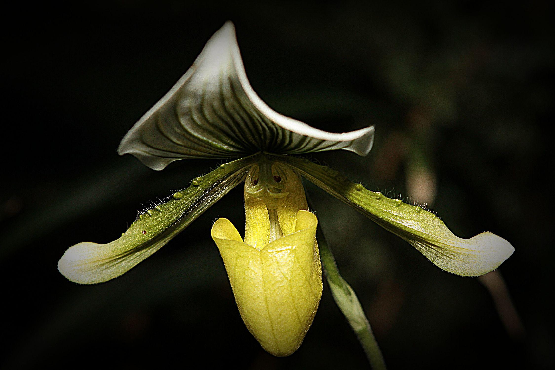Bild mit Orchideen, Orchidee, Orchid