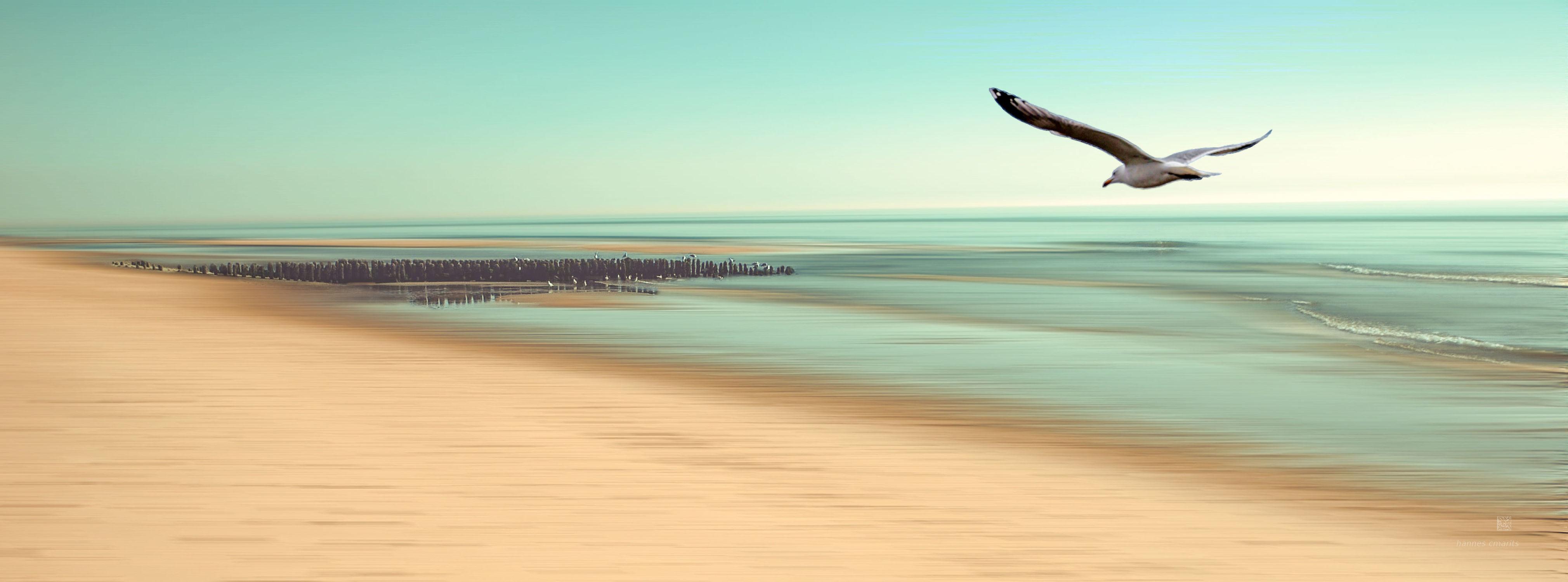 Bild mit Natur, Wasser, Wolken, Gewässer, Meere, Strände, Wellen, Sonnenuntergang, Urlaub, Sommer, Sonnenaufgang, Vögel, Strand, Meerblick, Ostsee, Düne, Dünen, clouds, Insel, Beach, Ocean, Sylt, Möwe, Küste, Möve, Reisen, Strand & Meer, Abend am Meer, Reise, Wolke, island, sea, seaside, ozean, nordfriesland, Möven