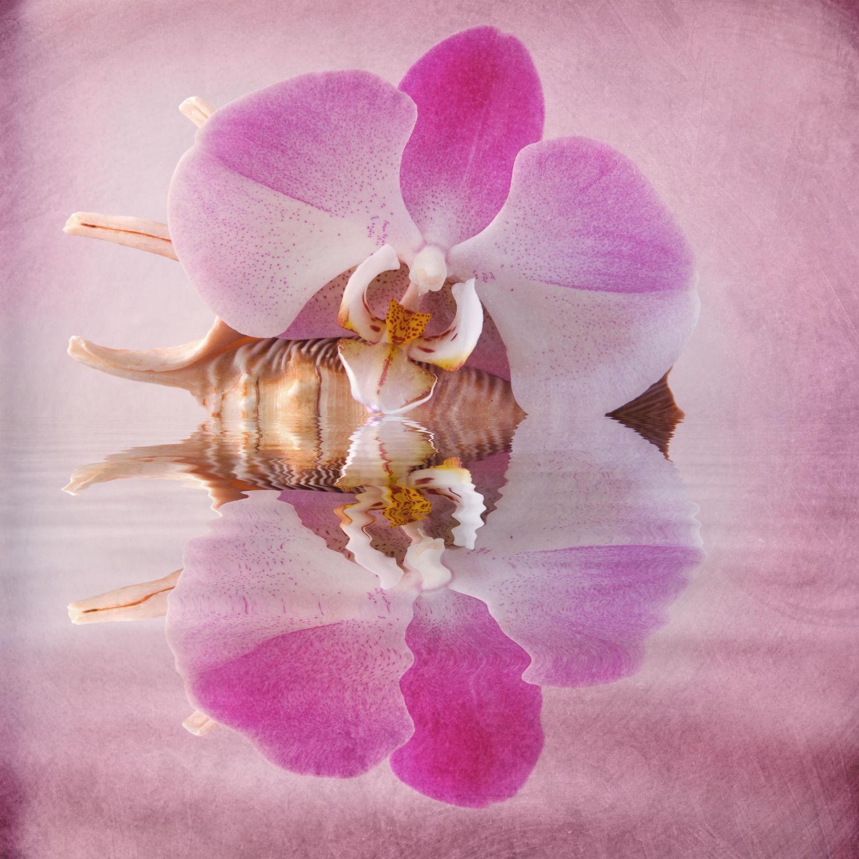 Bild mit Pflanzen, Blumen, Rosa, Orchideen, Blume, Orchidee, Pflanze, Blüten, blüte