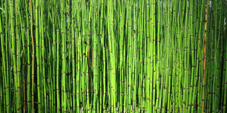 Bild mit Pflanzen, Bambus, Pflanze, Wellness, fototapete, bambuswald, bambusstangen, bambusrohr, bambuspflanze, Bambusblatt, Bambusblätter, wanddeko, wandklebefolie
