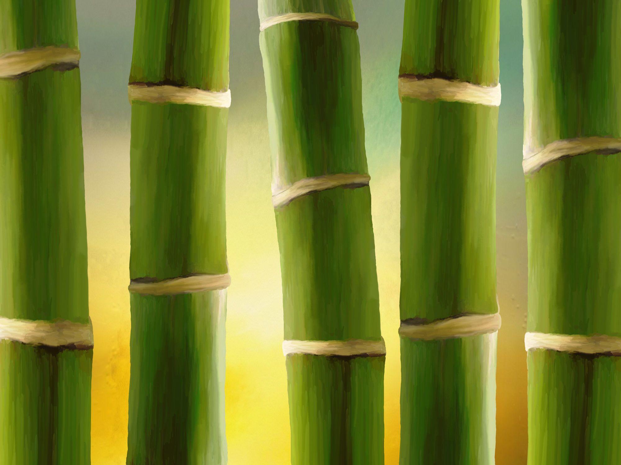 Bild mit Pflanzen, Bambus, Pflanze, Wellness, bambuswald, bambusstangen, bambusrohr, bambuspflanze, Bambusblatt, Bambusblätter