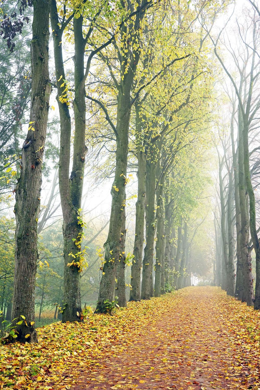 Bild mit Herbst, Herbst, Nebel, Park, Emden, Ostfriesland, Wall, Wanderwege, Wallring, Fahrradwege, Verteidigungswall