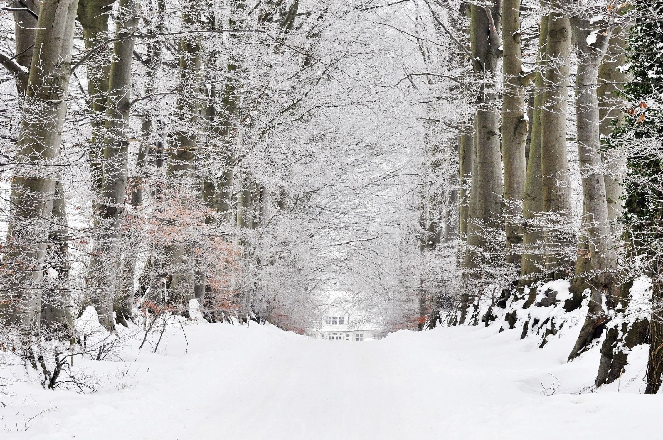 Bild mit Bäume, Winter, Schnee, Blätter, Alleen, Winterzeit, Raureif