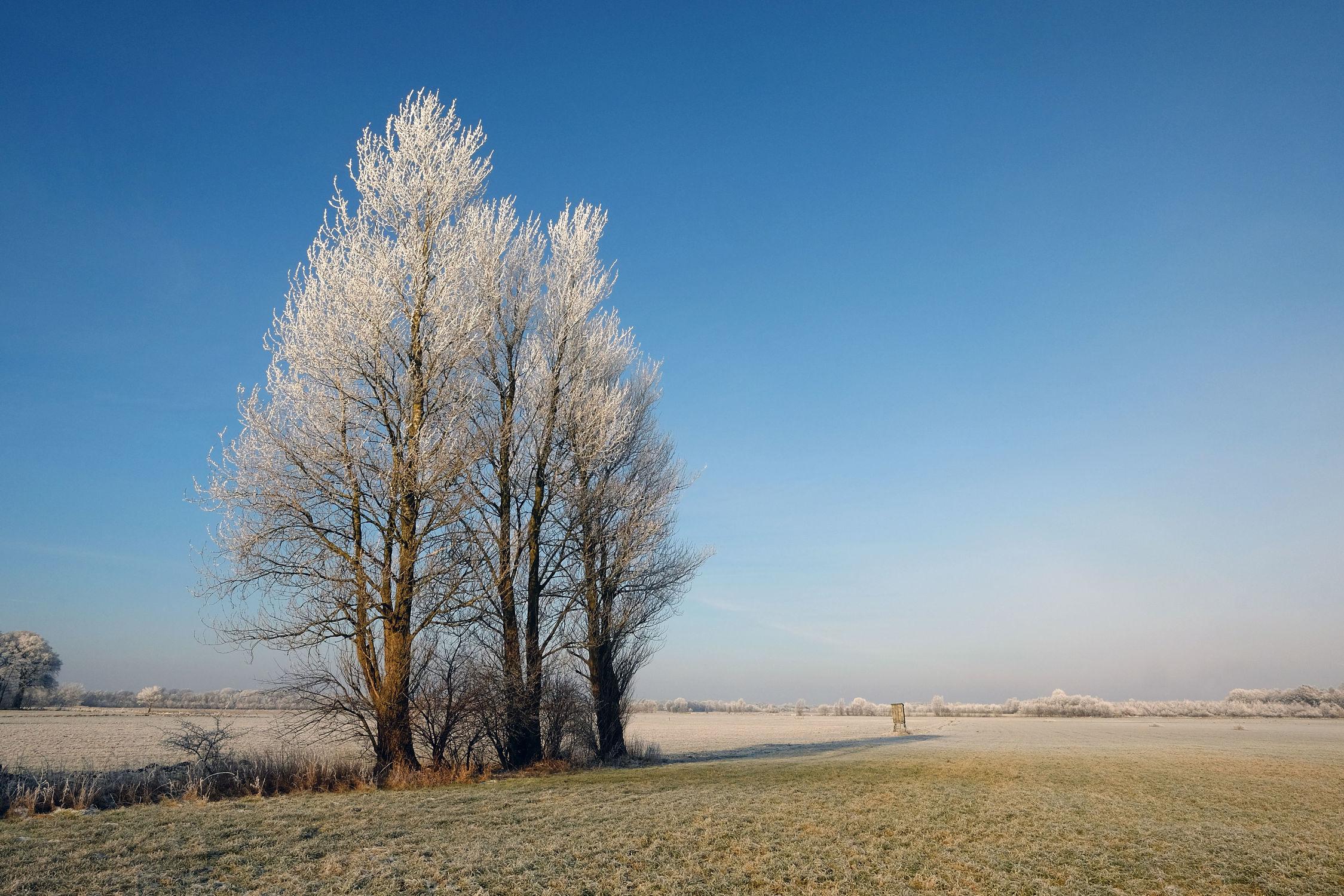 Bild mit Himmel, Bäume, Winter, Felder, Wiesen, Wanderwege, Schleswig_Holstein, Raureif, Büsche, Naturpark_Westensee, Westensee, Nortorfer_Land, Nortorf, Bäumereihe, Blau Azur