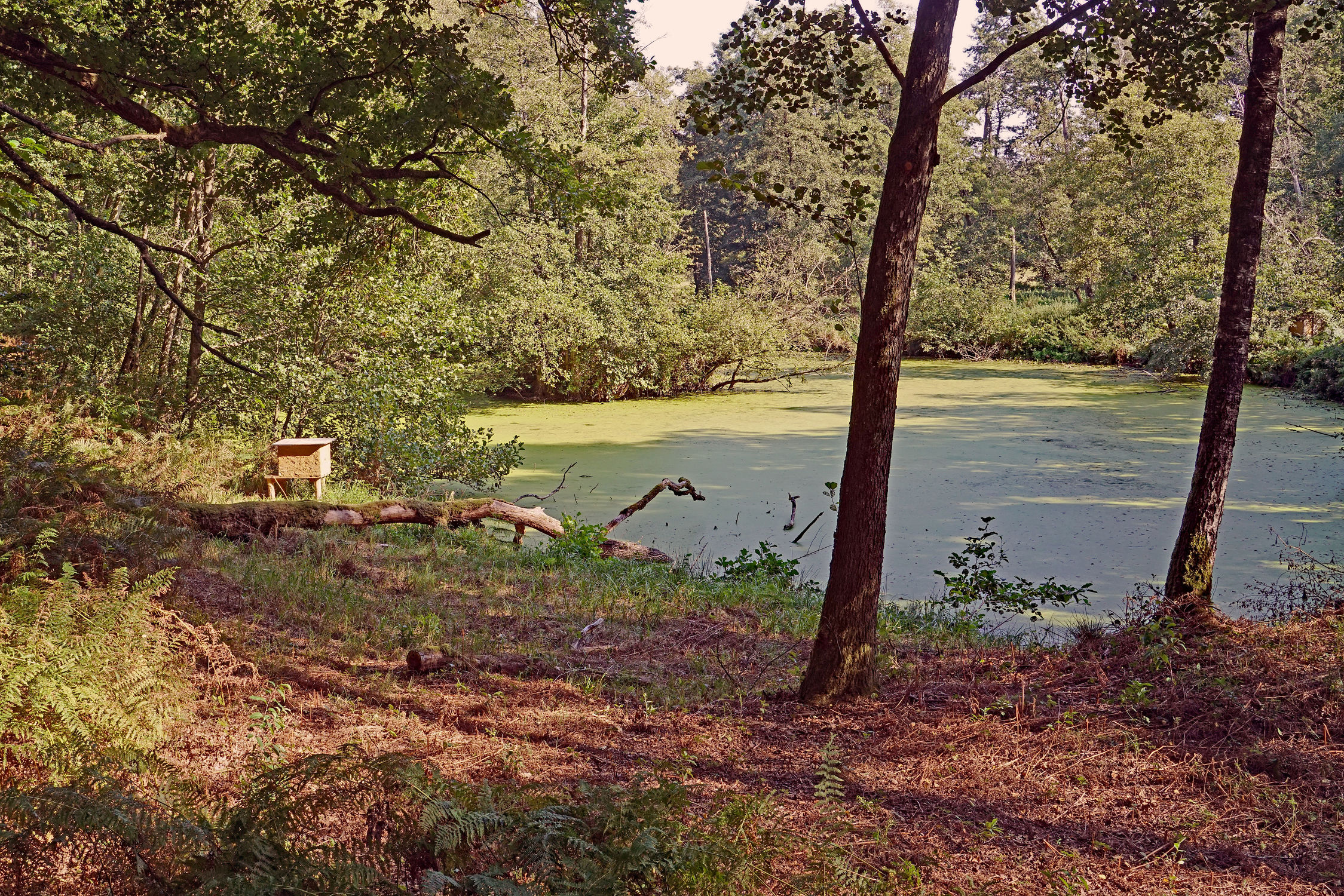 Bild mit Bäume, Wald, Weiher, Farne, Ruhestätte, Eisvögelgebiet