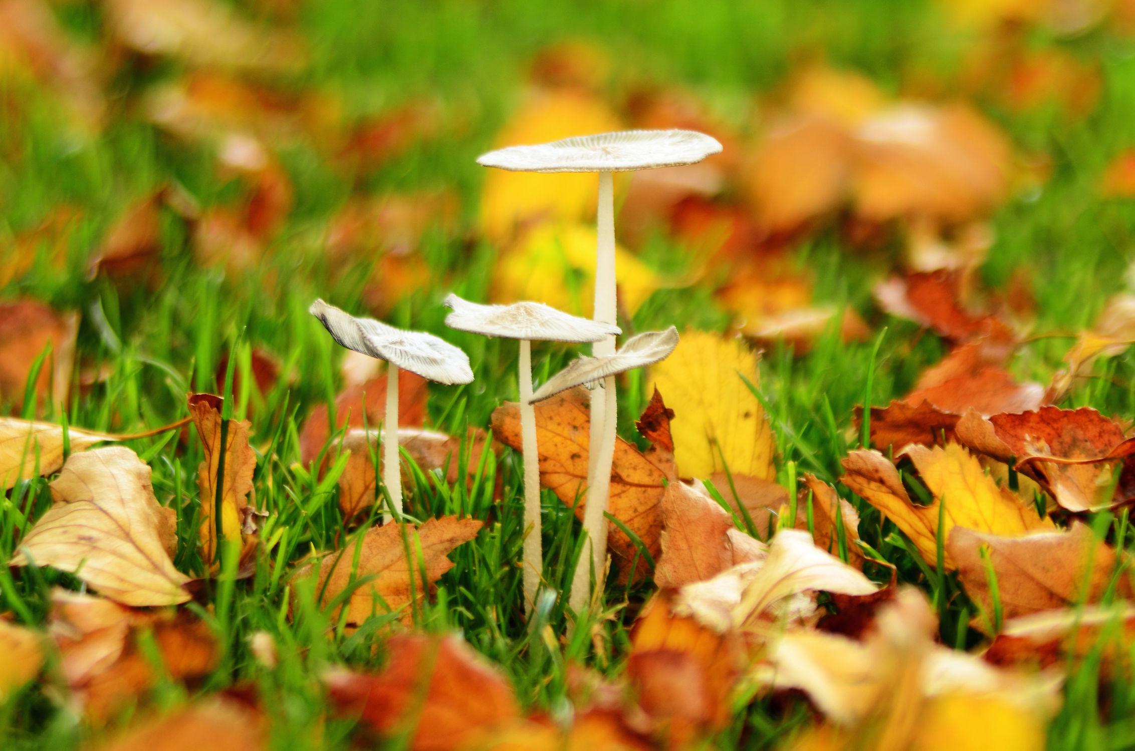Bild mit Natur, Herbst, Blätter, Lebewesen, Gegenlicht, Licht, Pilze, Rasen, herbstlich, Idylle, pilz, Ostfriese