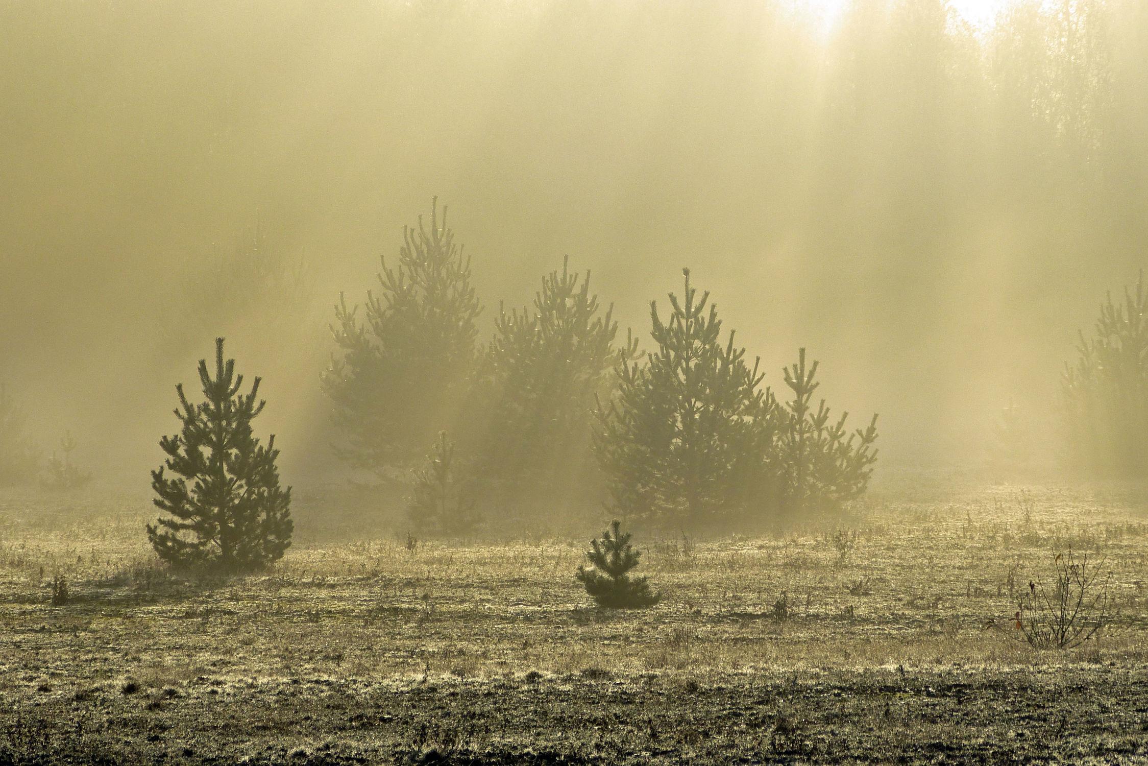 Bild mit Landschaften, Bäume, Sträucher, Nebel, Sonne, Licht, Felder, Sonnenstrahlen, Wiesen, Wärme, Idylle, Dunst, Ostfriese, Morgenstunde, Tagesanbruch, Taganbruch, Erwärmung, Morgenidylle