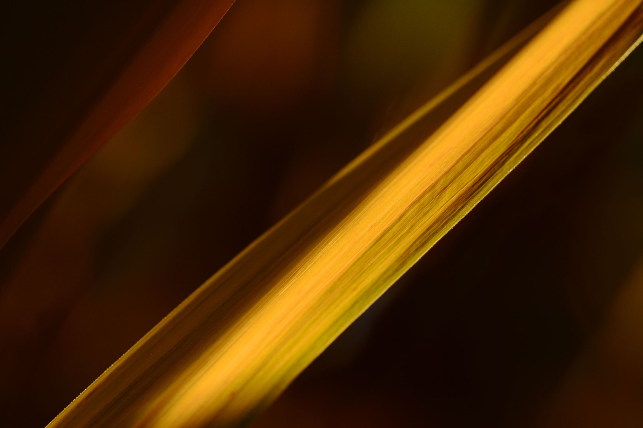 Bild mit Gräser, Herbst, Licht, Tapeten, Hintergründe, Idylle, Idylle, reet, Schatten, Ostfriese, Diagonale, Röhrricht, Gas, Grsstauden